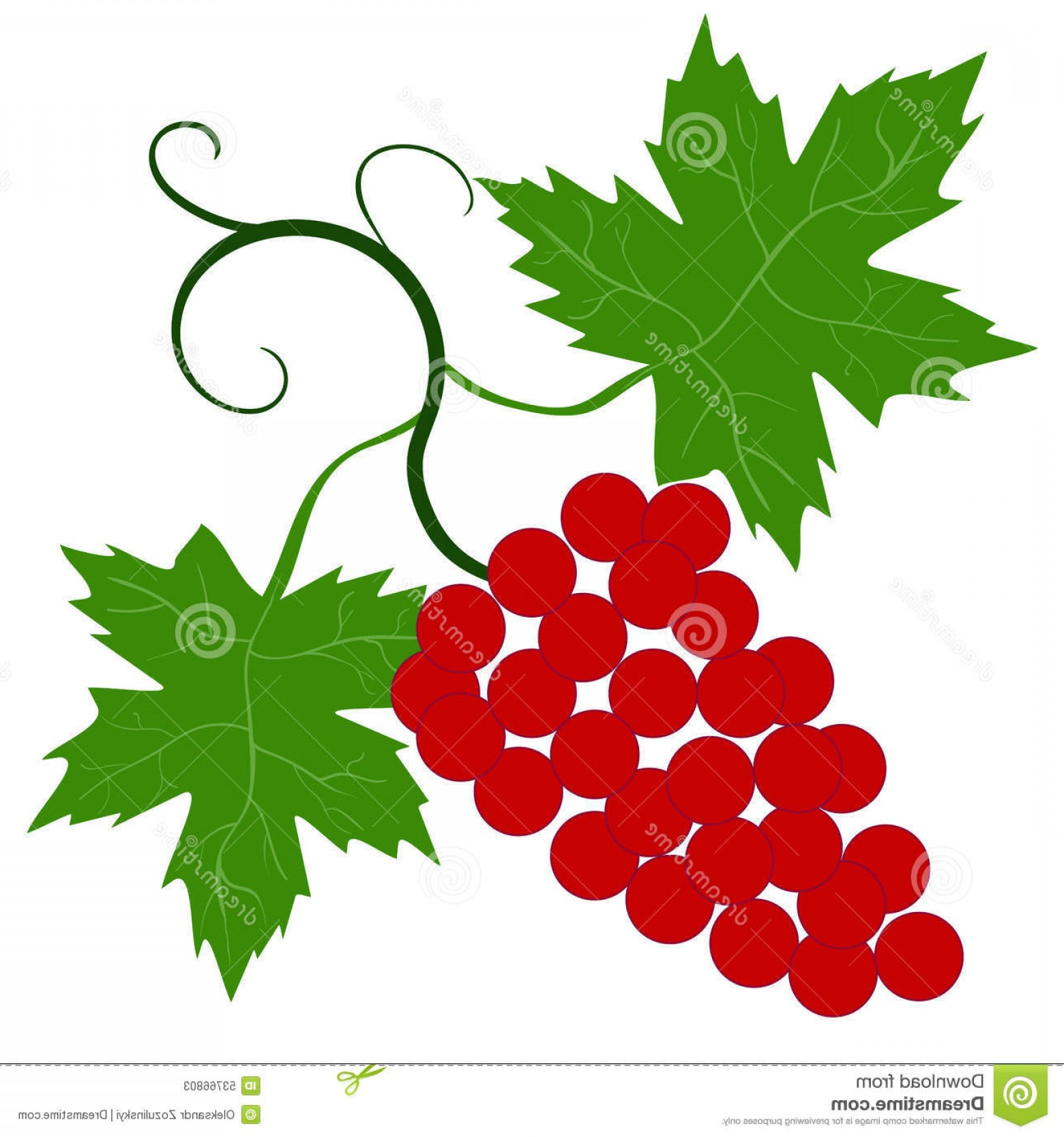 Vector Vine Tree: Stock Illustration Decorative Grapes Vine Vector Ornament Image