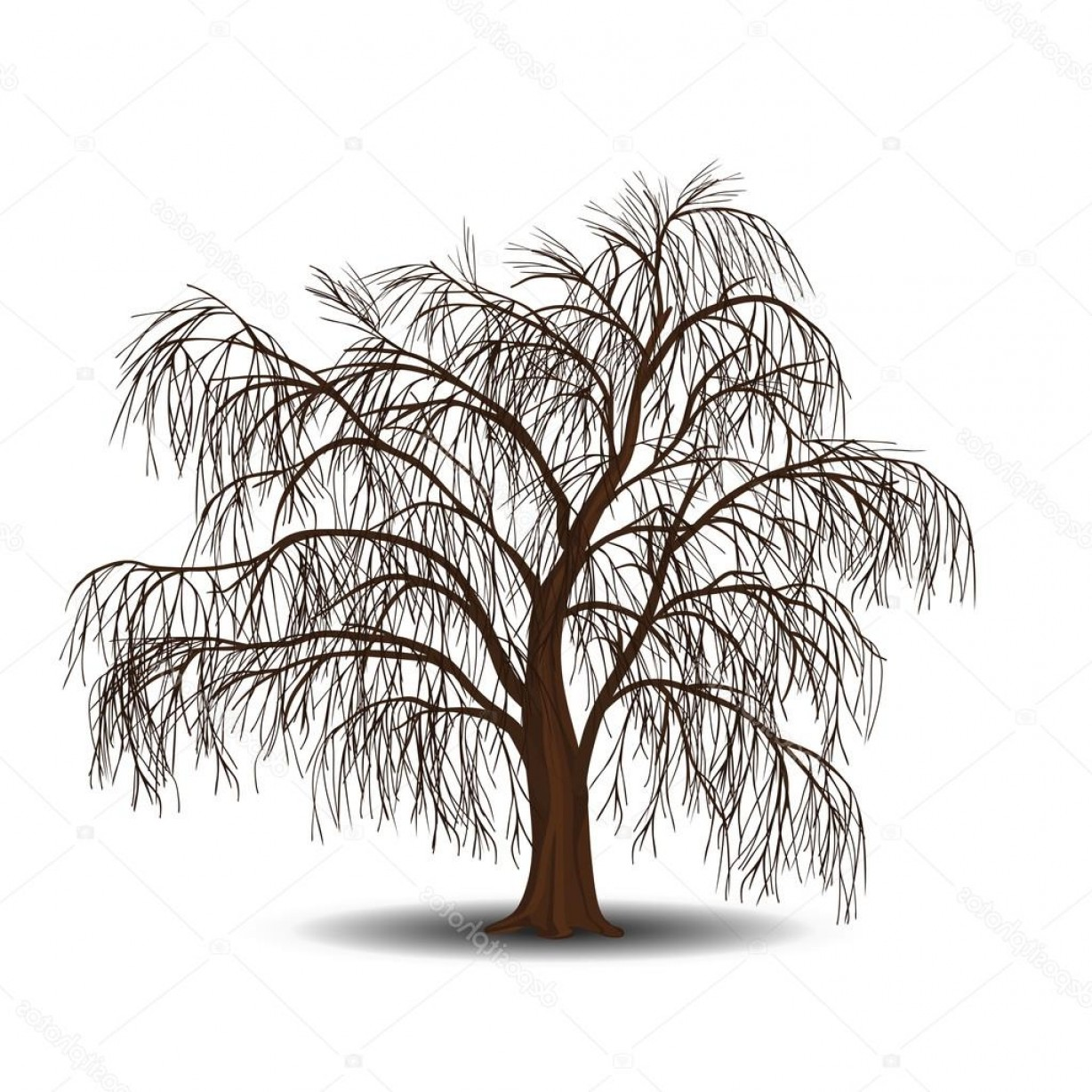 Vector Natural Willow: Stock Illustration Detached Tree Willow Without Leaves