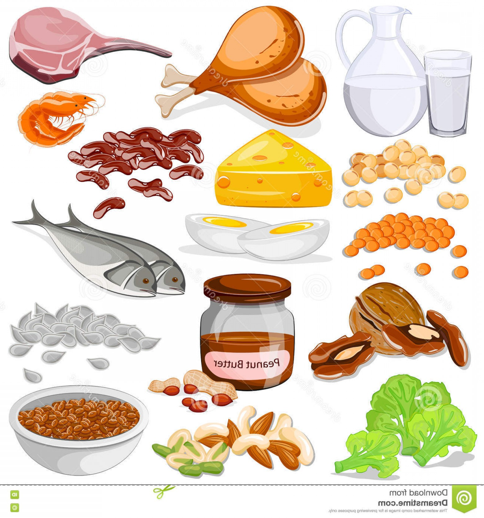 Vector Protein: Stock Illustration Different Sources Protein Food Collection Vector Illustration Image
