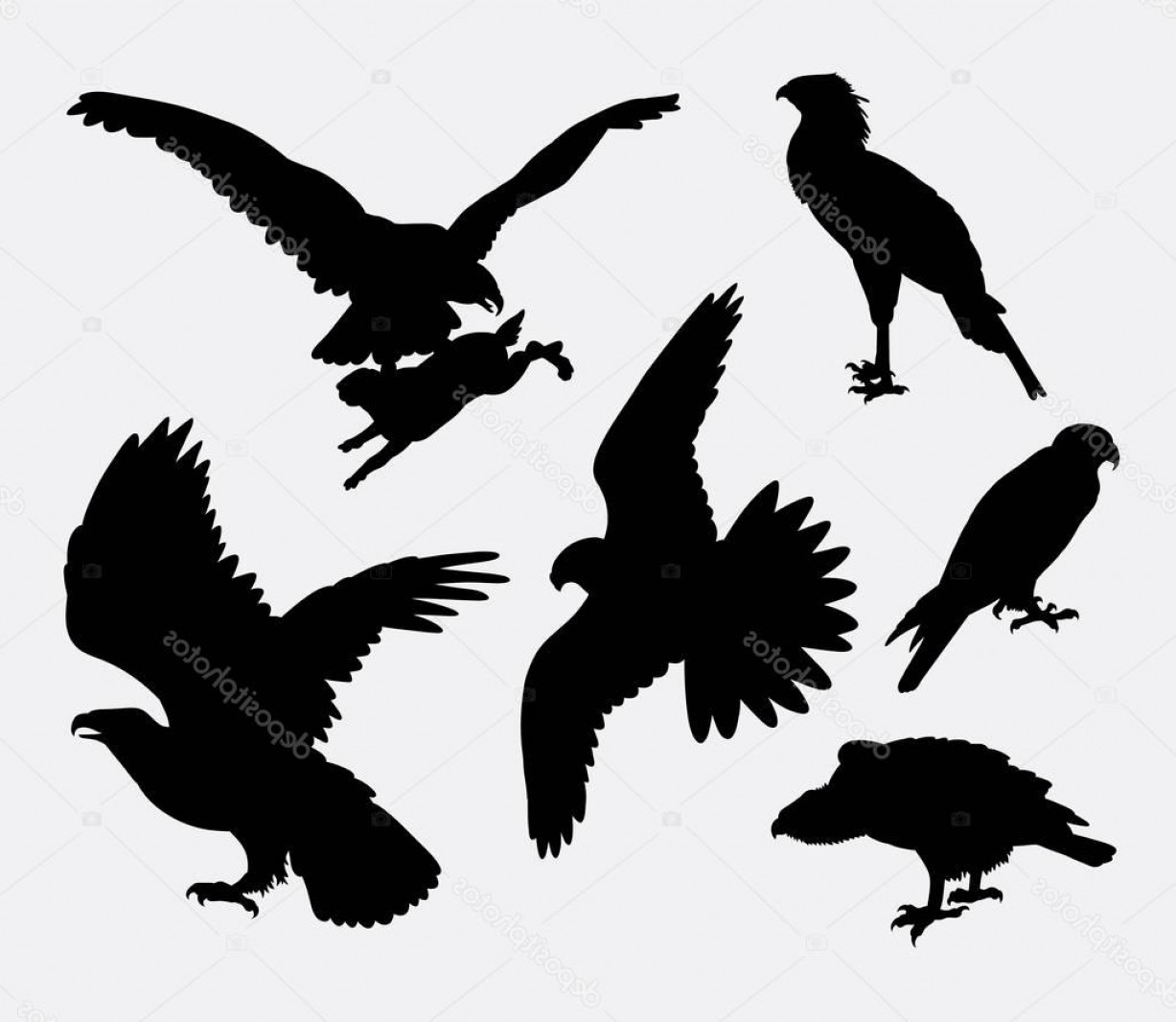Falcon Silhouette Vector: Stock Illustration Eagle Hawk Falcon Pose Bird