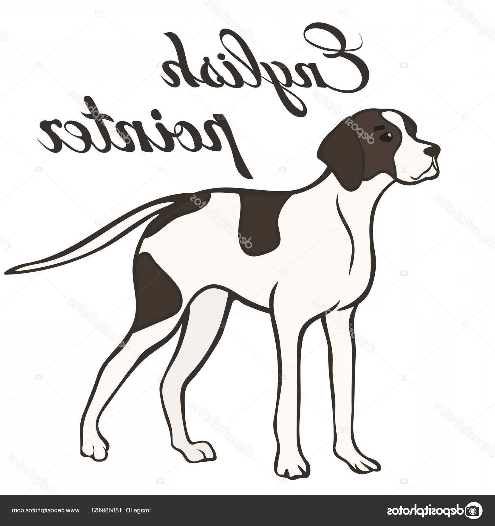 Pointer Dog Vector: Stock Illustration English Pointer Dog Breed Vector