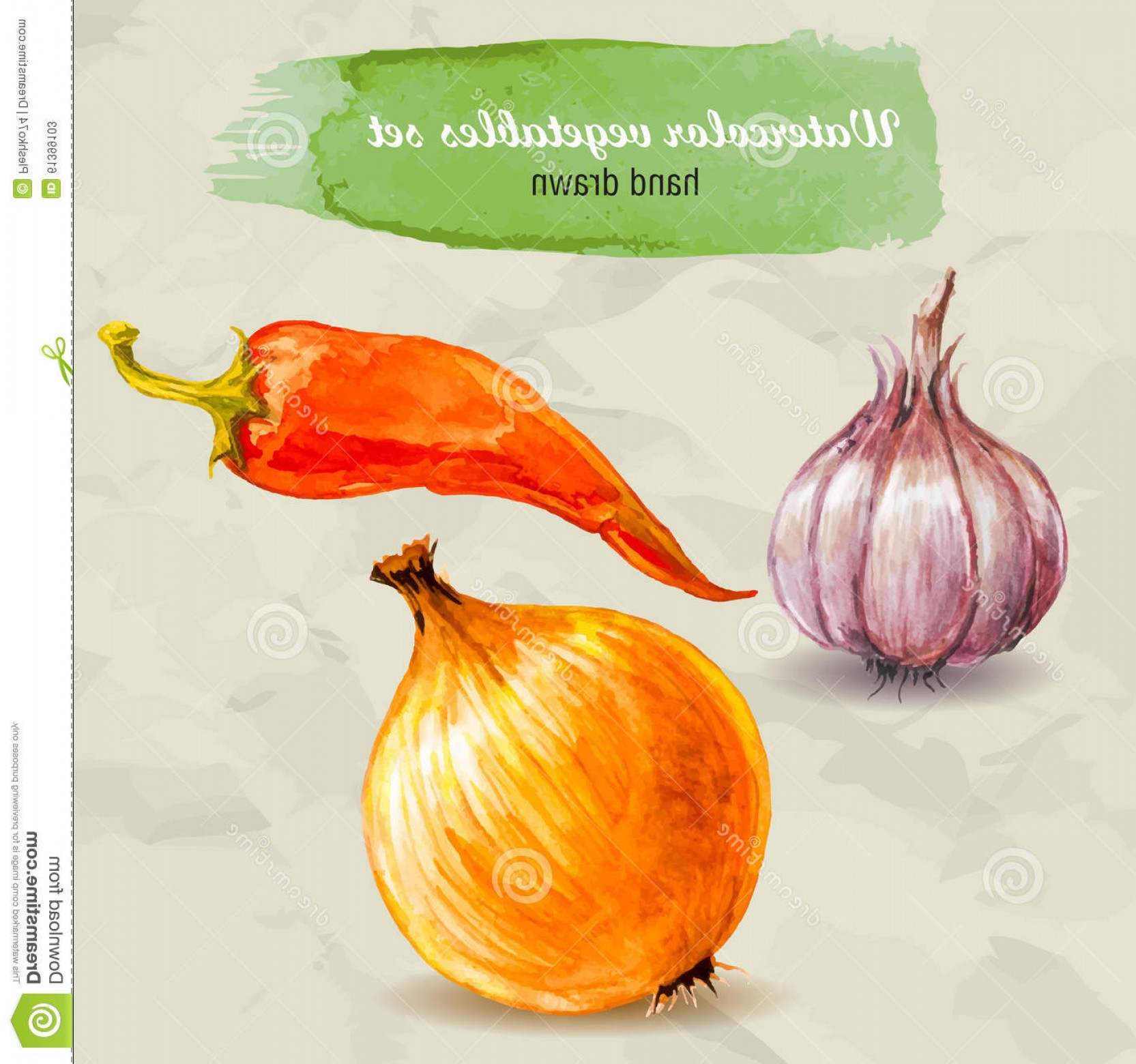 Onion Vector: Stock Illustration Garlic Red Hot Pepper Onion Vector Watercolor Hand Drawn Vegetable Set Paper Drops Organic Food Illustration Image