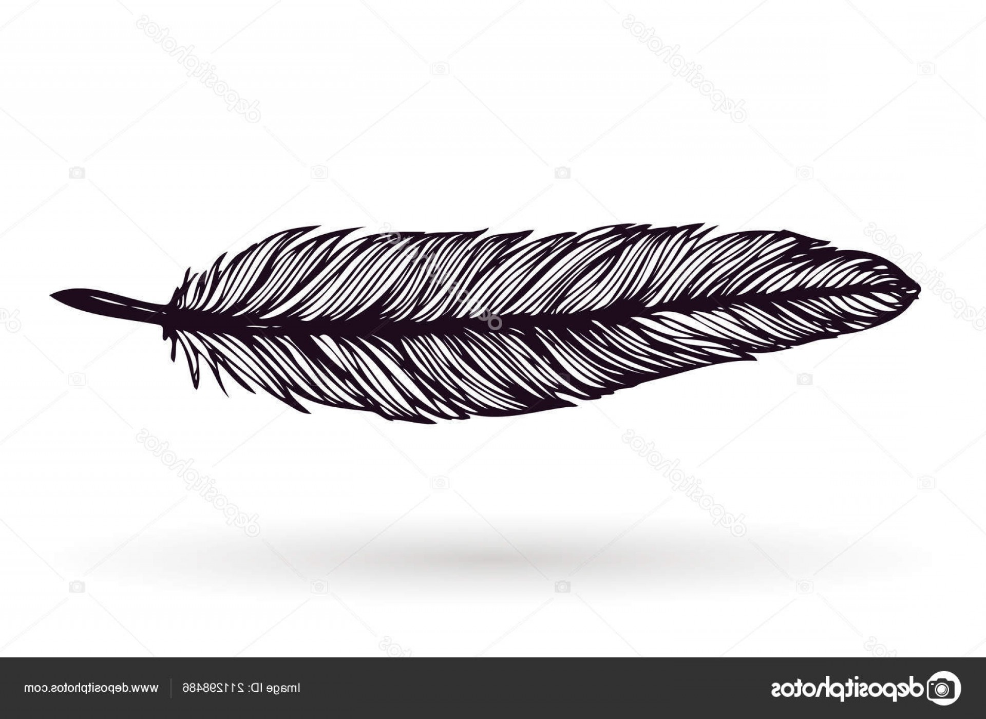 Vector Drawing Feathers: Stock Illustration Hand Drawn Feather Isolated White