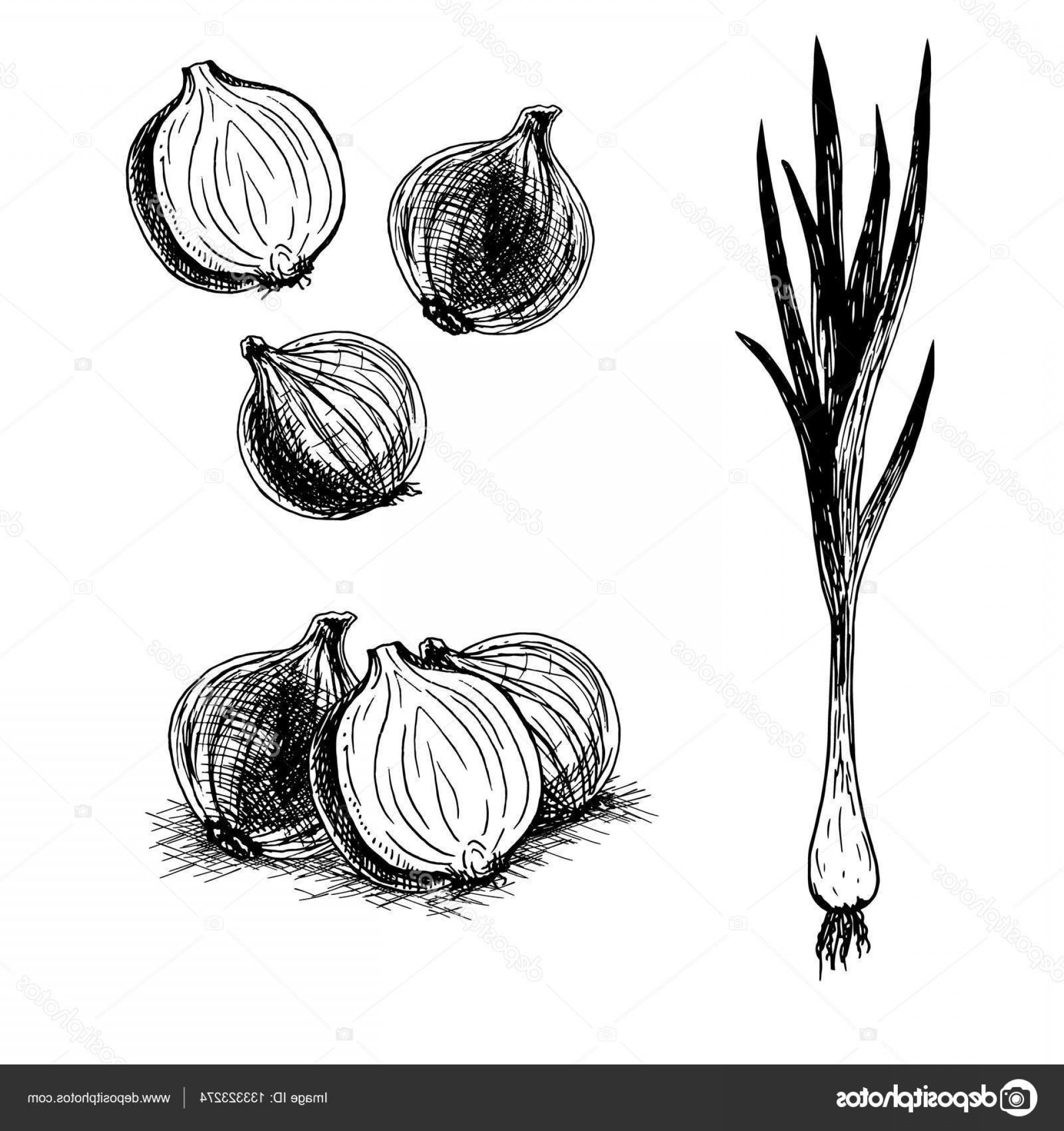 Onion Vector: Stock Illustration Hand Drawn Set Of Onion