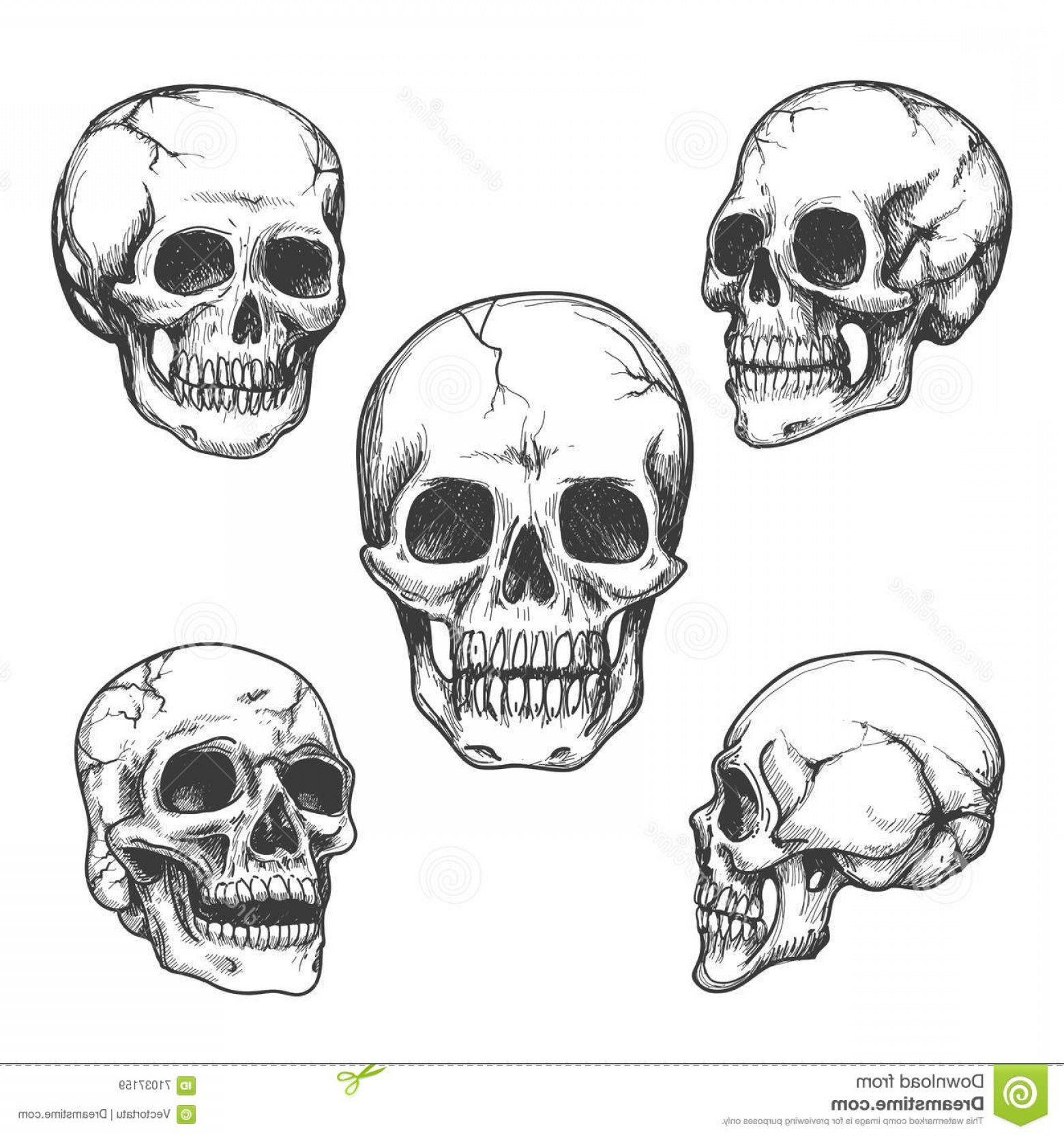 His And Hers Skulls Vector: Stock Illustration Hand Drawn Skulls Skull Vector Illustrations Set Image