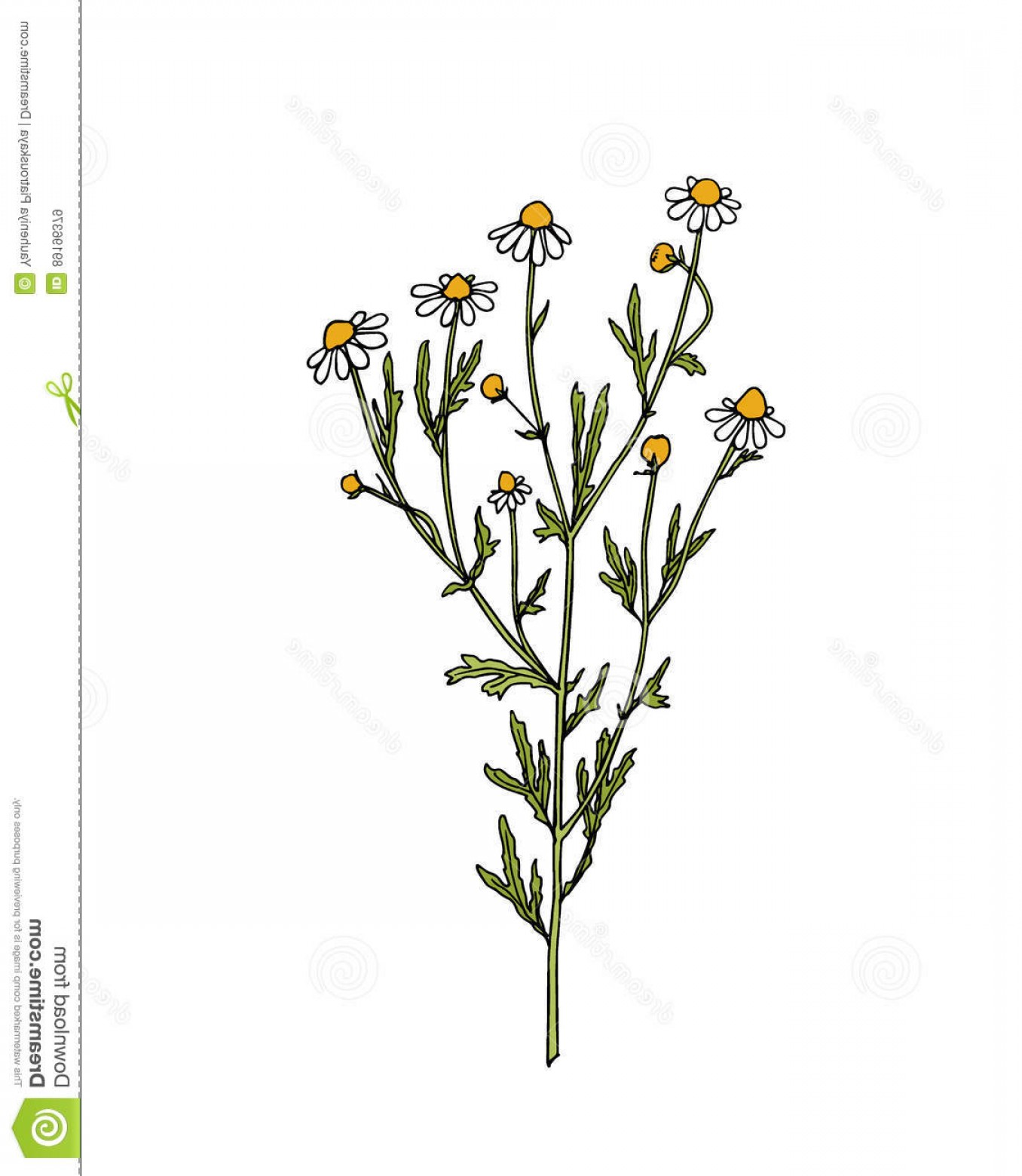 Wildflowers Outline Vector: Stock Illustration Hand Drawn Wildflower Vector Illustration Chamomile Twig Beautiful Ink Drawing Vintage Style Image