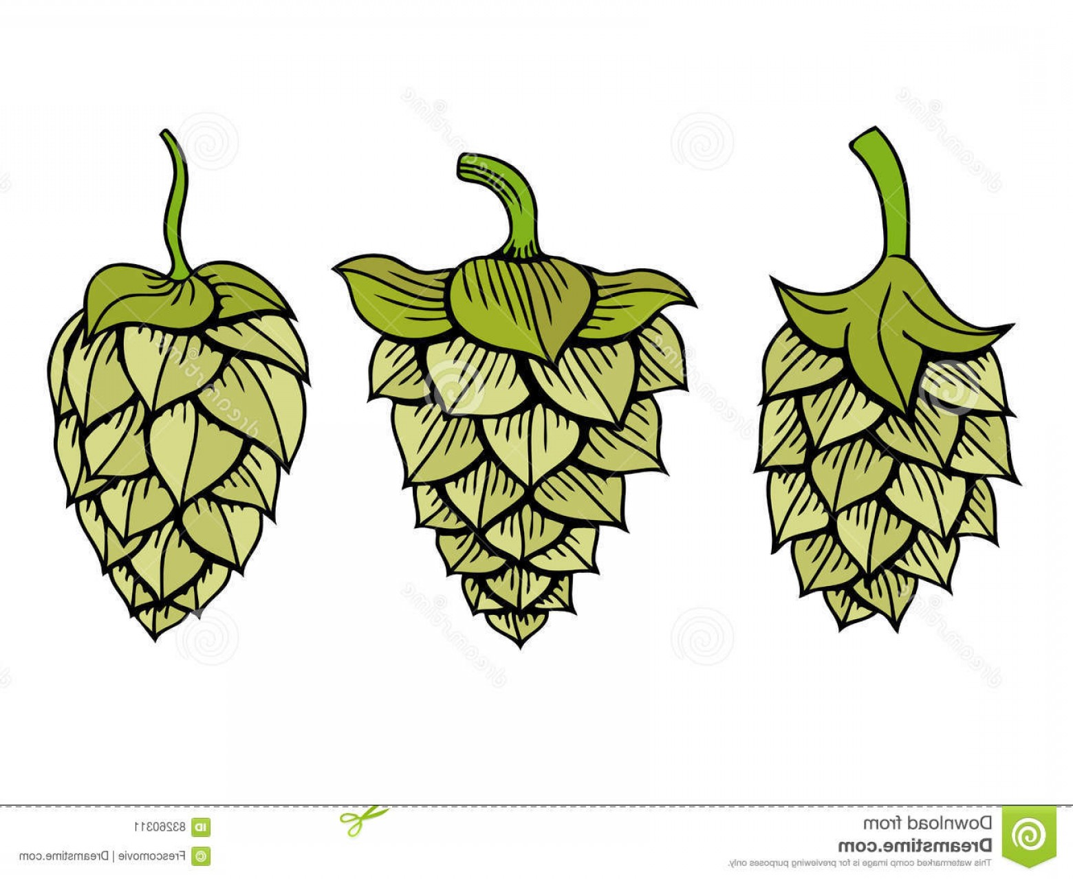 Hops Vector Art: Stock Illustration Hops Vector Visual Graphic Set Icon Logo Ideal Beer Stout Ale Lager Bitter Labels Packaging Etc Hop Herb Plant Image
