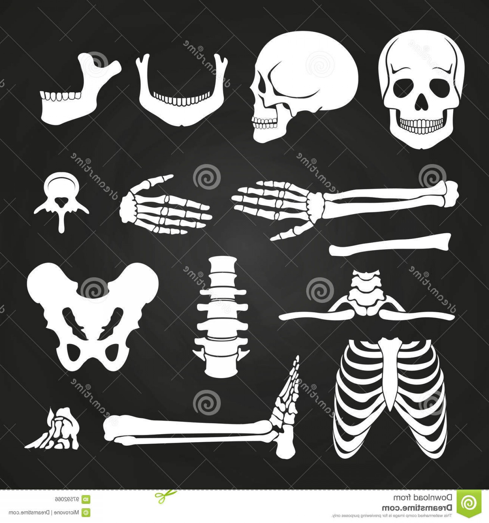 Line Art Human Body Skeleton Labeled Bones Of The Vector: Stock Illustration Human Bones Collection Chalkboard Skeleton Anatomy Backbone Hand Bone Vector Illustration Image