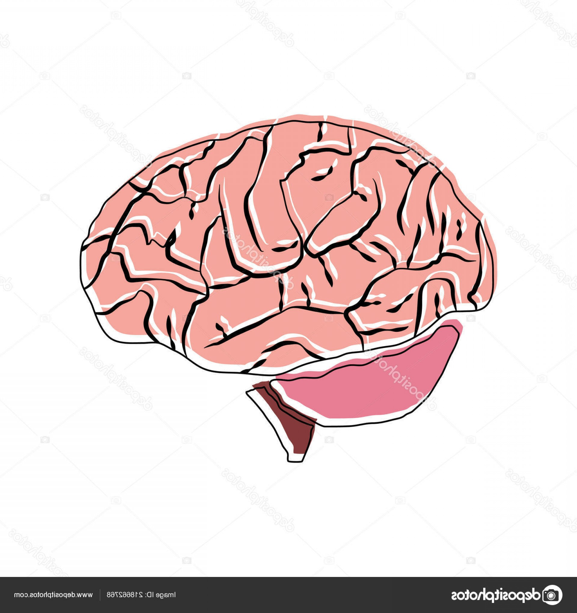 Brain Vector Art: Stock Illustration Human Brain Vector Art Single