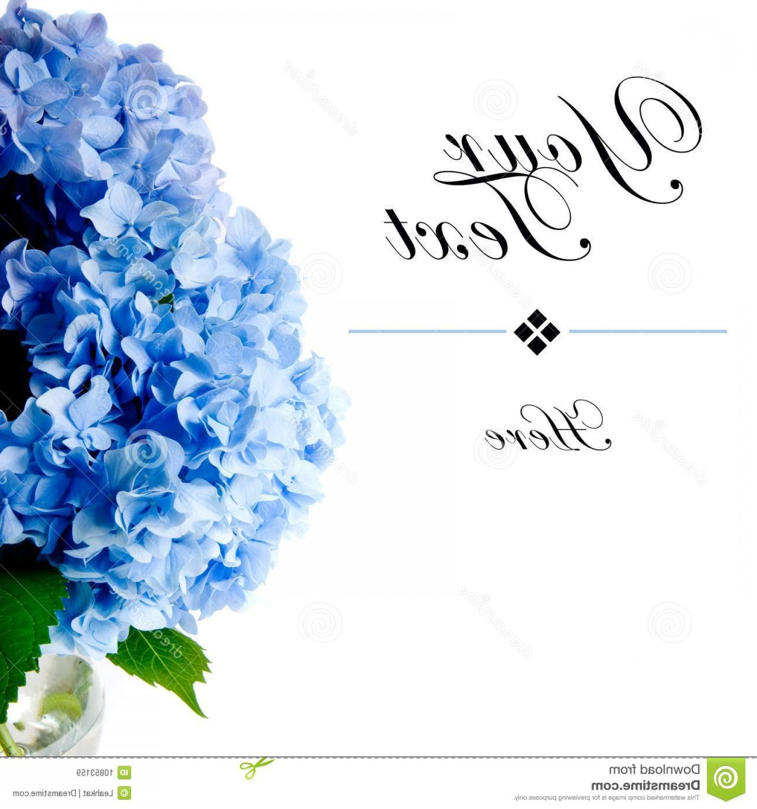 Hydrangea Vector Graphics: Stock Illustration Illustration Beautiful Watercolor Blue Hydrangea Flowers Bouquet White Background Image