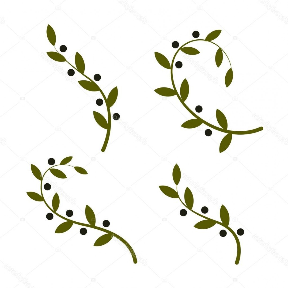 Olive Vector: Stock Illustration Isolated Olive Branch Vector Logo