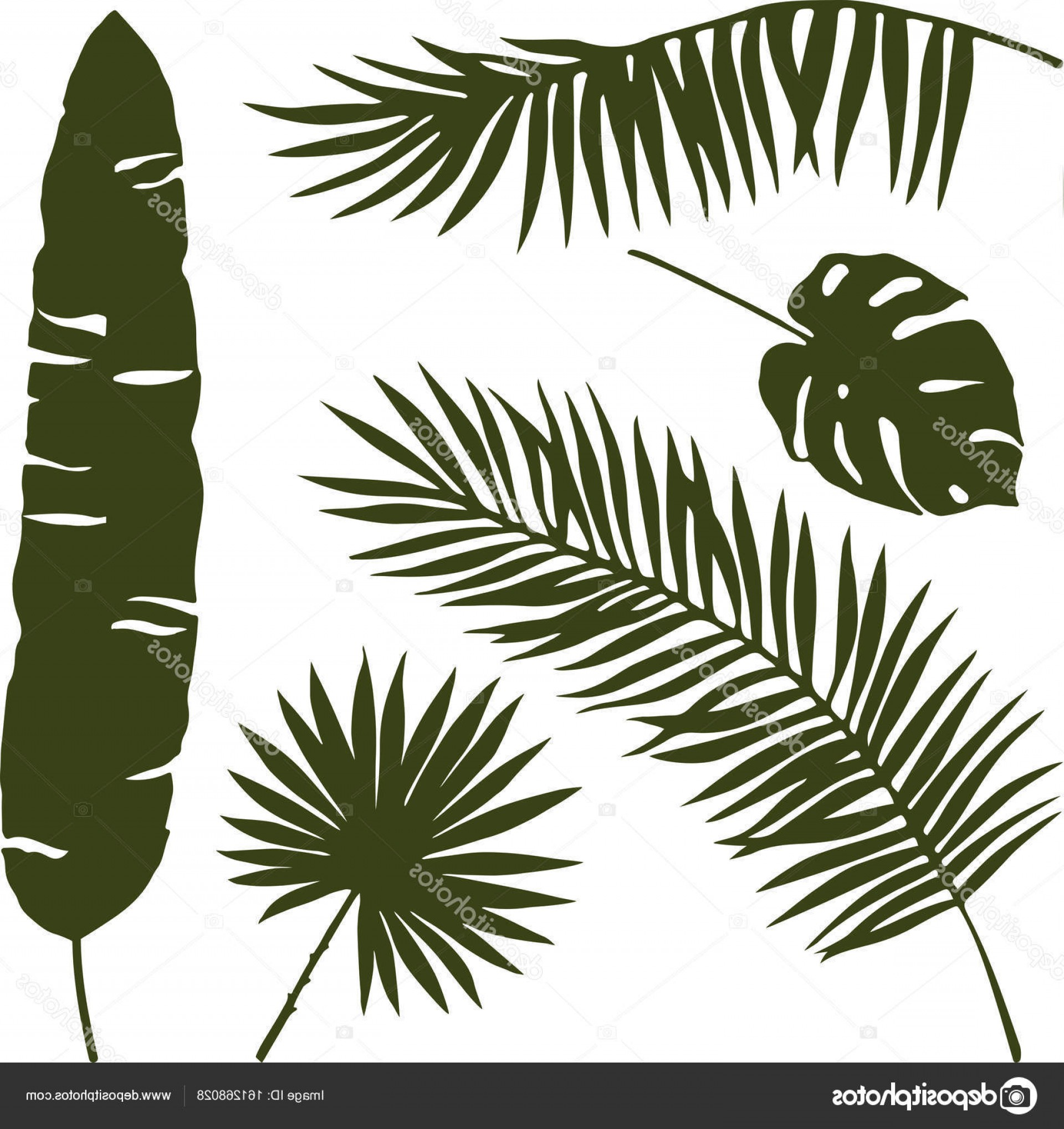 Pine Leaf Vector: Stock Illustration Isolated Palm Leaves Vector