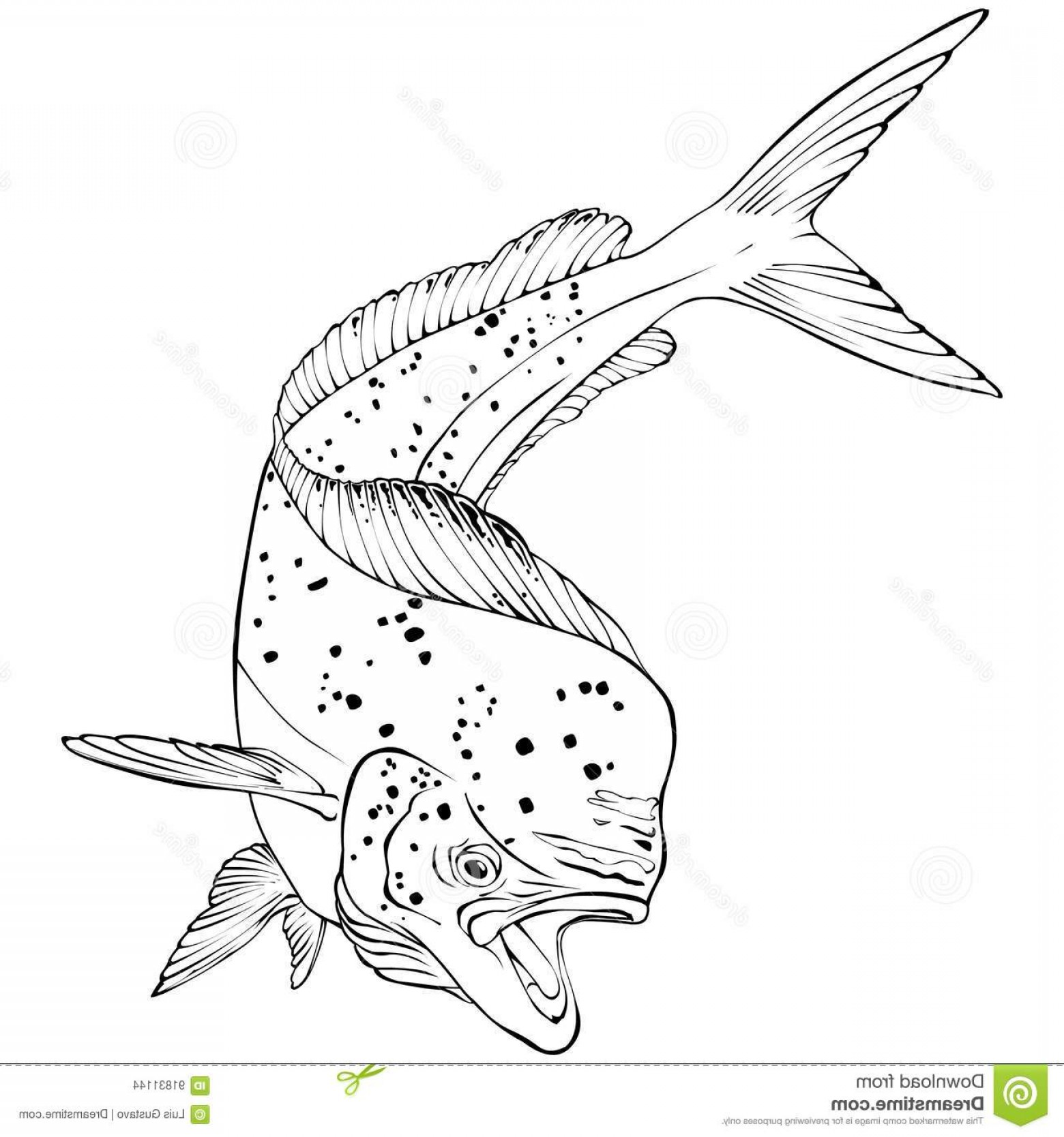 Mahi Mahi Outline Vector Images: Stock Illustration Mahi Mahi Fish Vector Illlustration Jumping Illustration Image