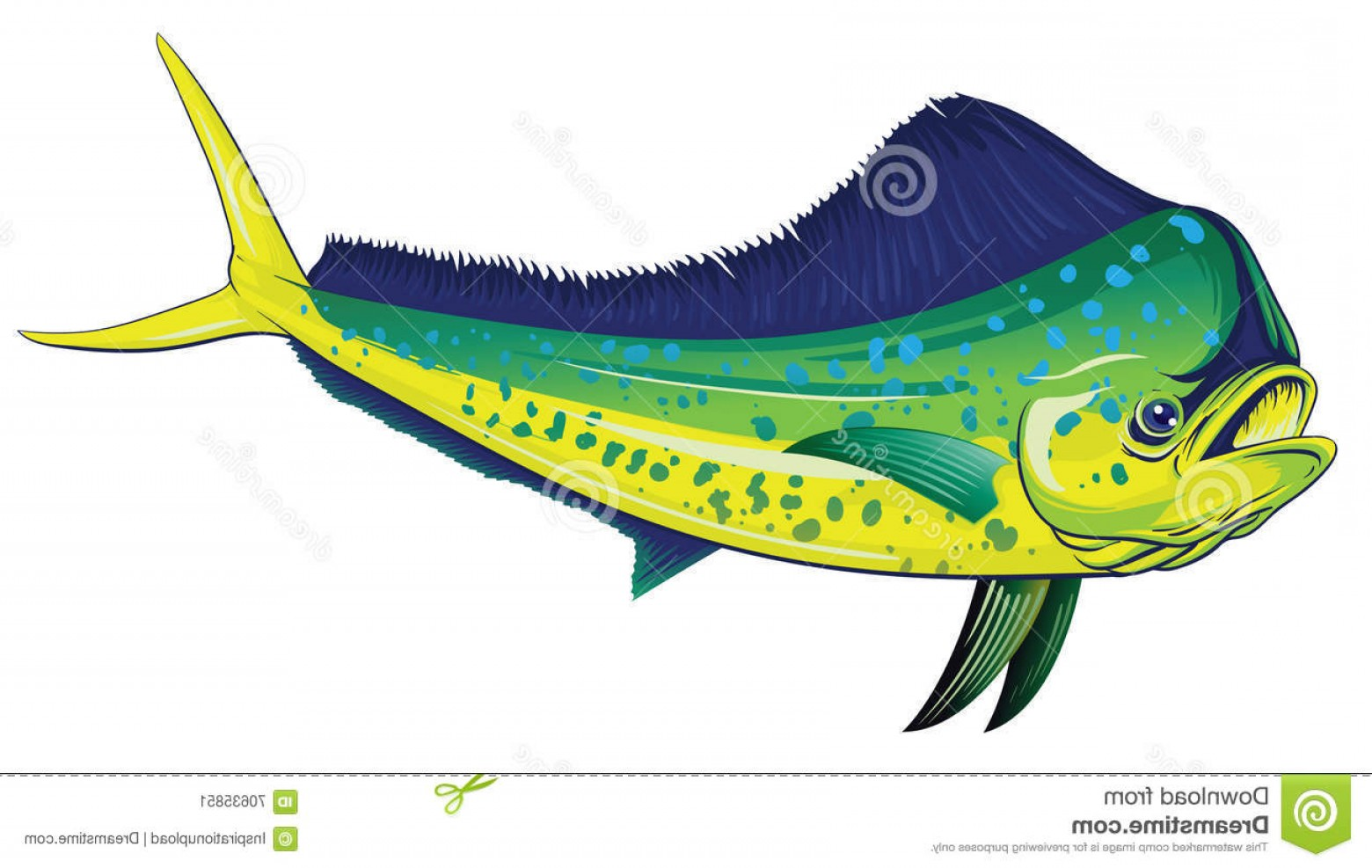Mahi Mahi Outline Vector Images: Stock Illustration Mahi Mahi Vector Detailed Illustration Full Color Vector File Layered Easy Customization Image