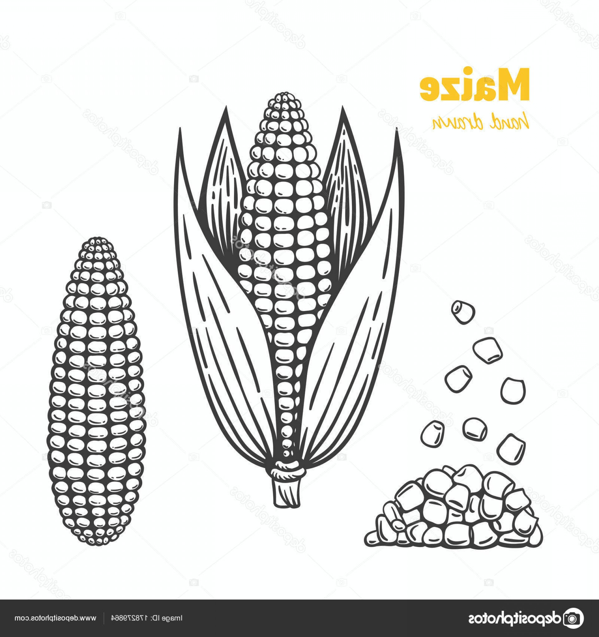 Maize Vector Tree: Stock Illustration Maize Vector Hand Drawn Illustration