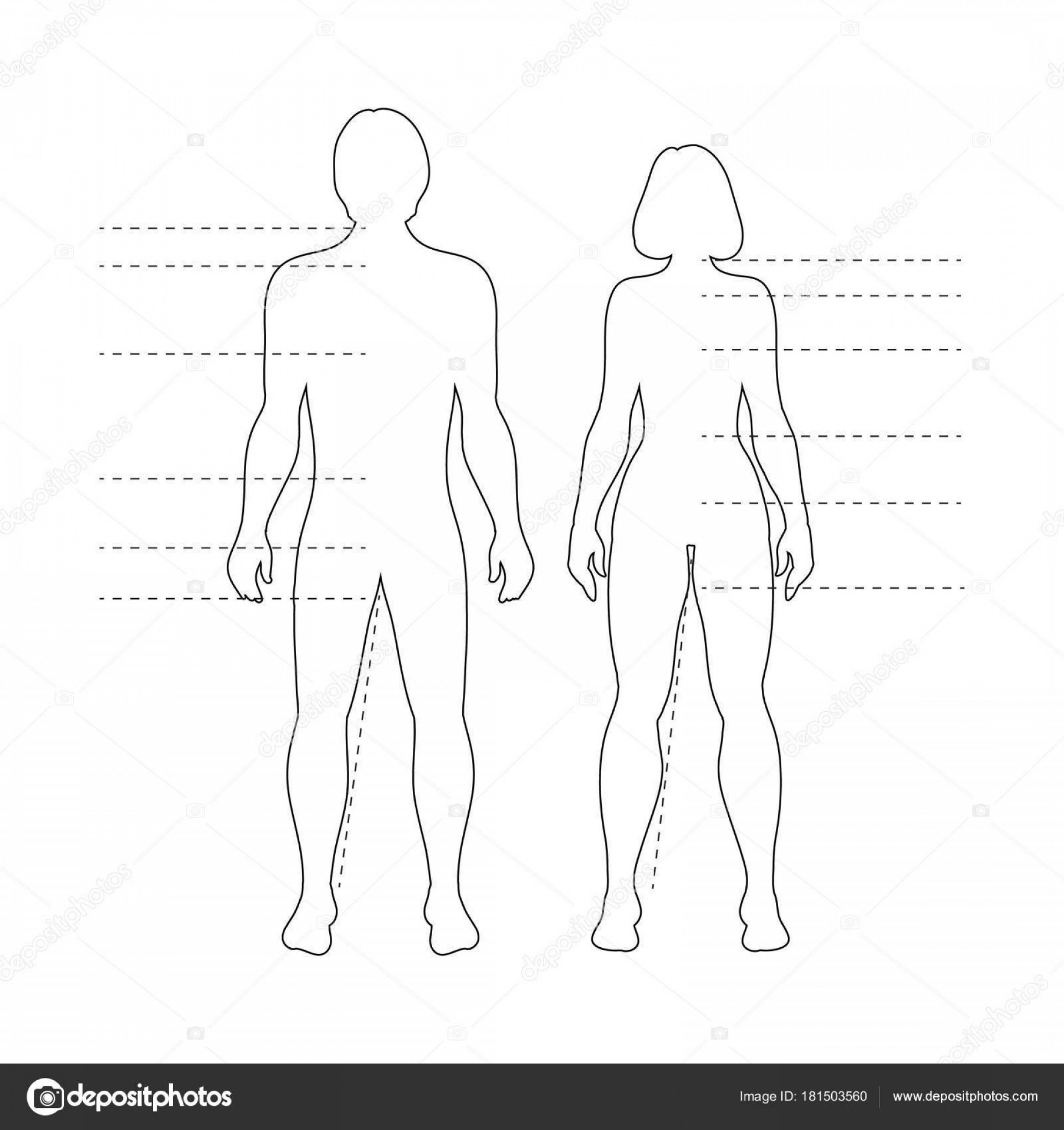 Human Body Outline Vector: Stock Illustration Man Woman Human Body Silhouettes