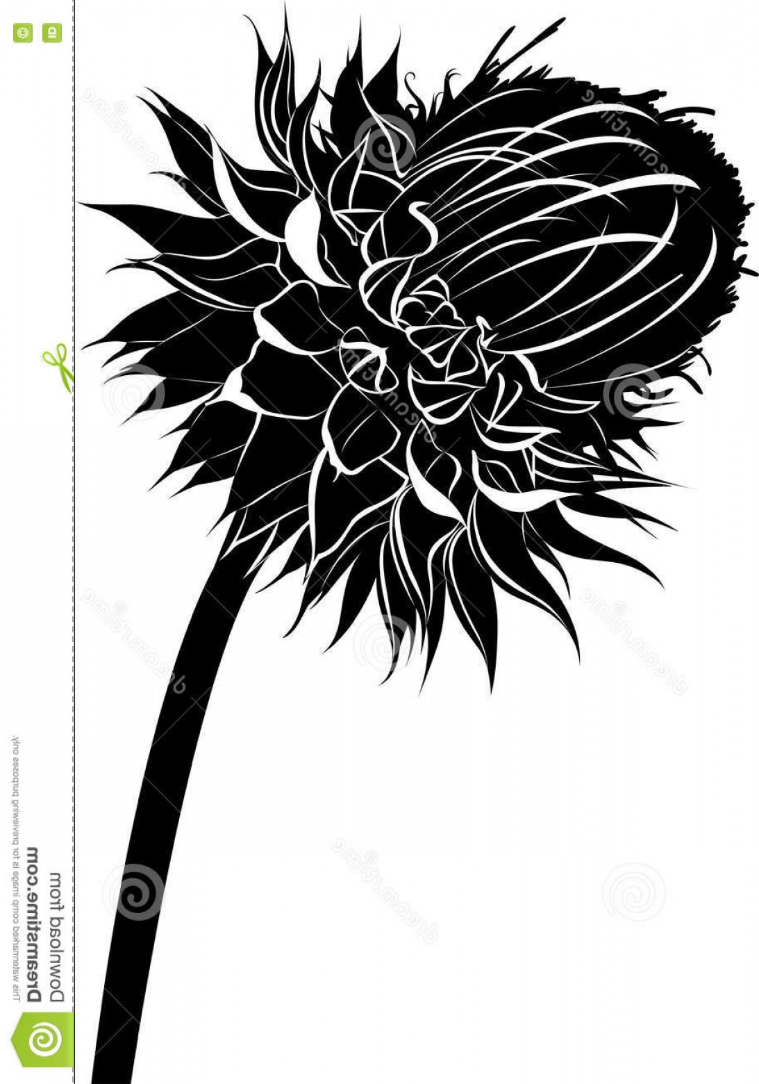 Spring Vector Silhouette: Stock Illustration Milk Thistle Flower Bloom Spring Vector Black Silhouette Isolated White Background Image