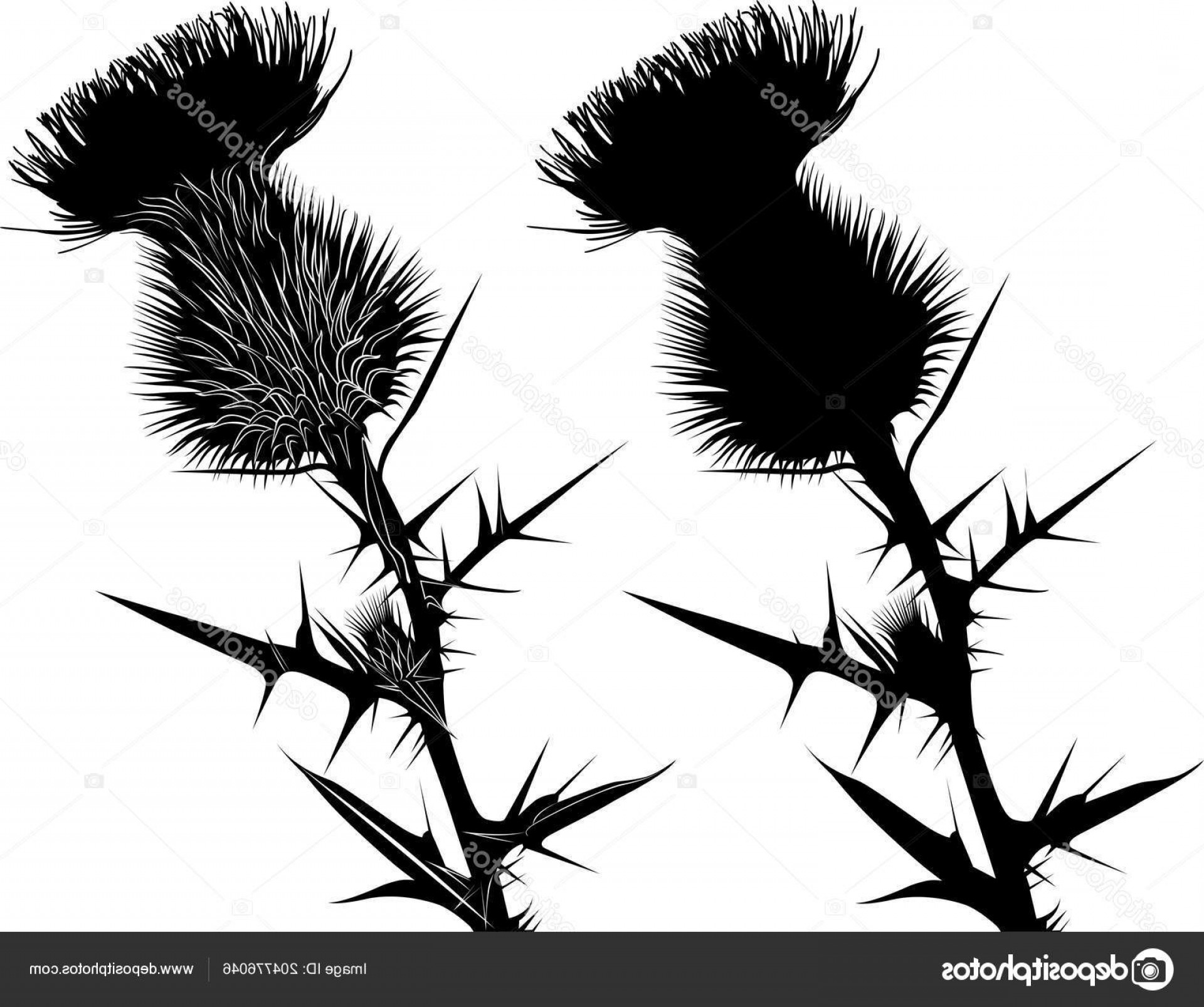 Spring Vector Silhouette: Stock Illustration Milk Thistle Flower Bloom Spring