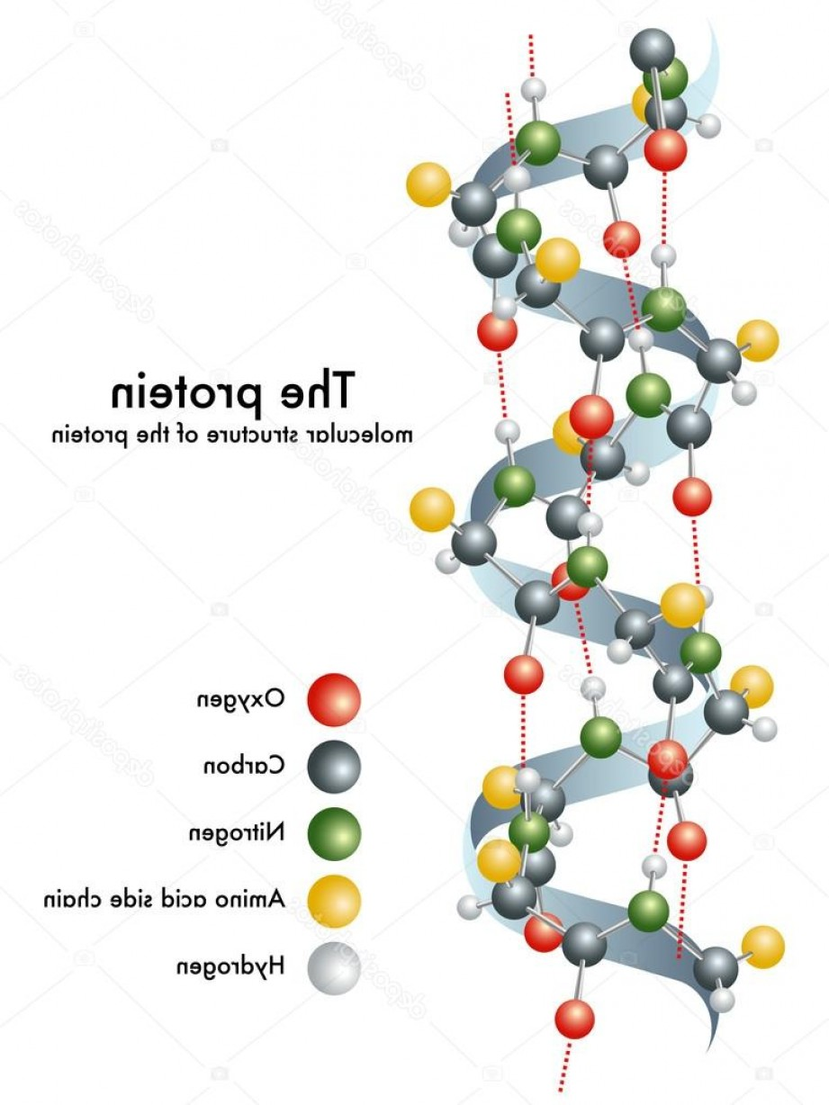 Vector Protein: Stock Illustration Molecular Structure Of The Protein