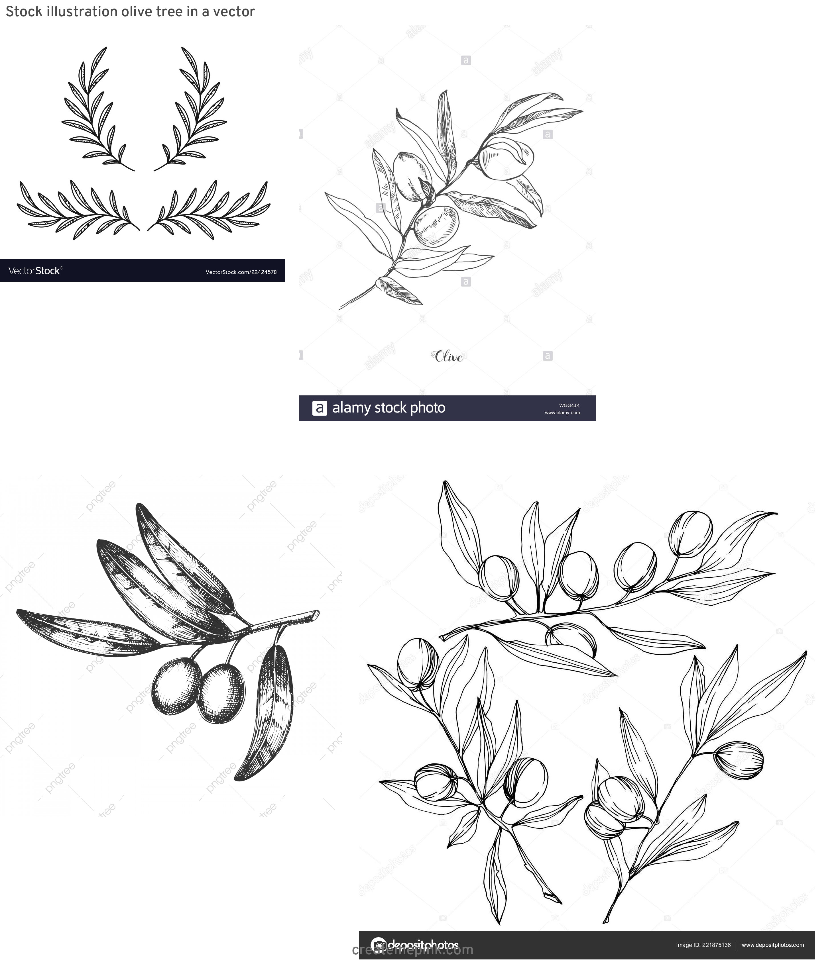 Olive Black And White Vector Leaves: Stock Illustration Olive Tree In A Vector