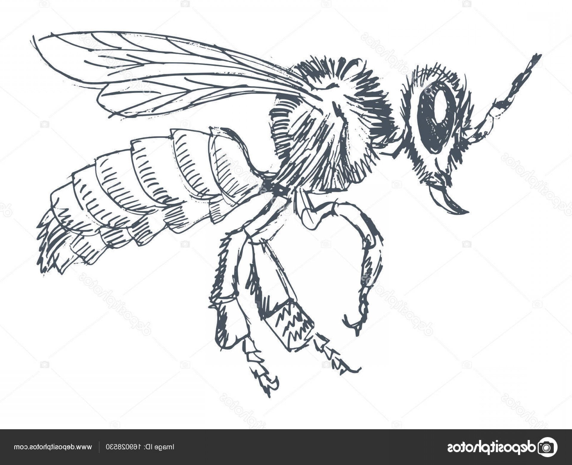 Bee Drawing Vector: Stock Illustration Ordinary Bee Side View