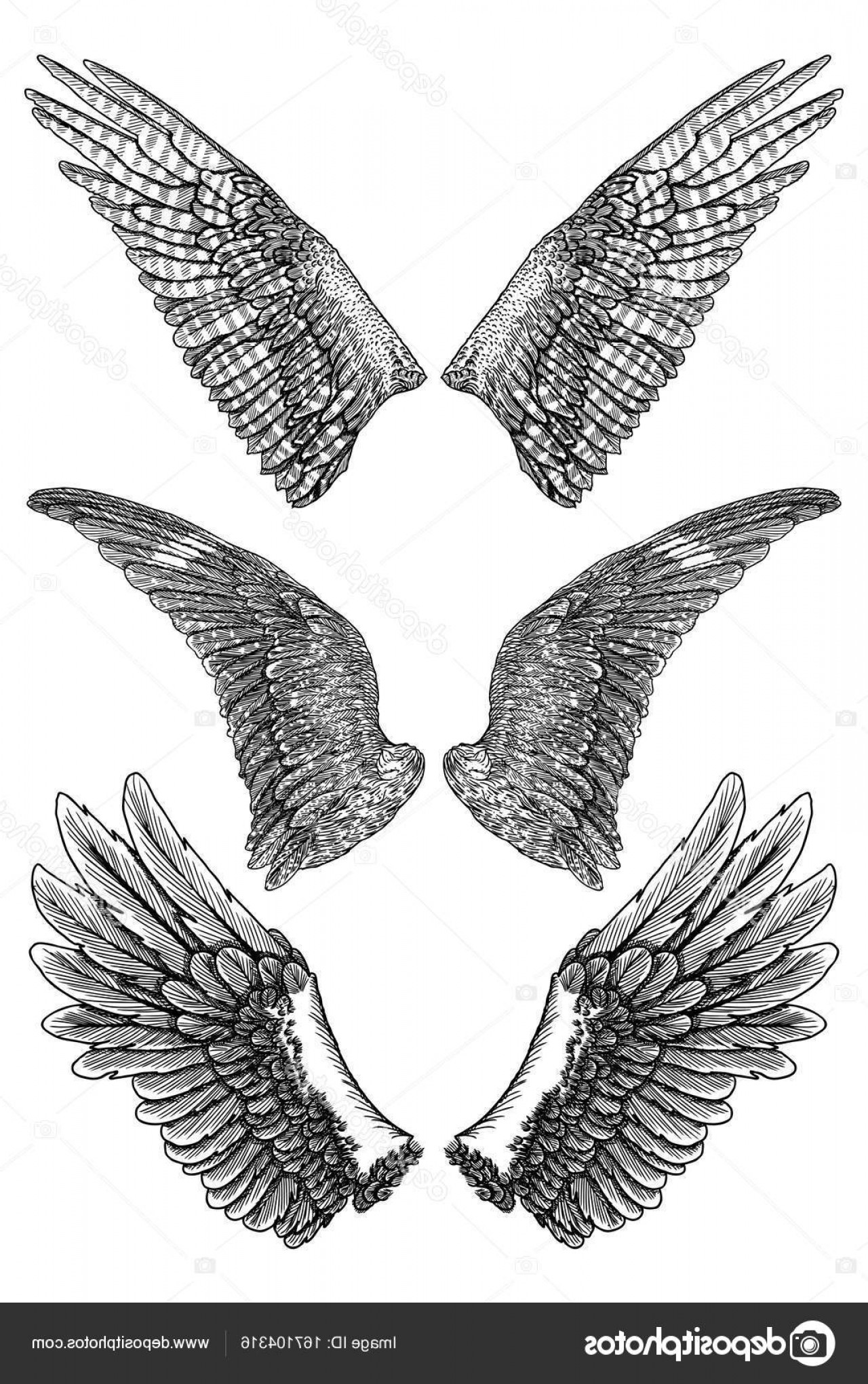 Falcon Wing Vector Art: Stock Illustration Pair Of Spread Out Eagle