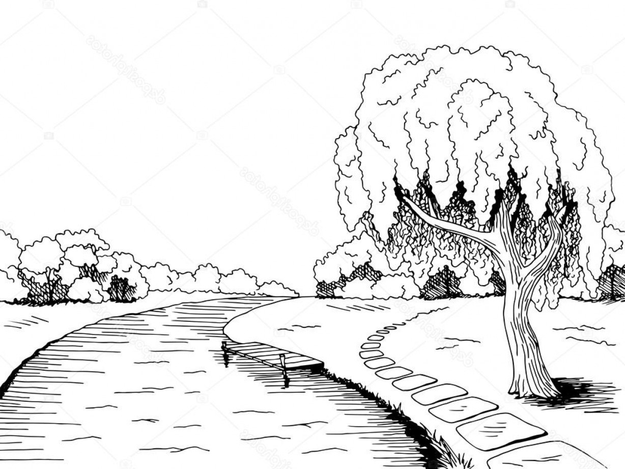 Vector Water Willow: Stock Illustration Park River Willow Tree Graphic