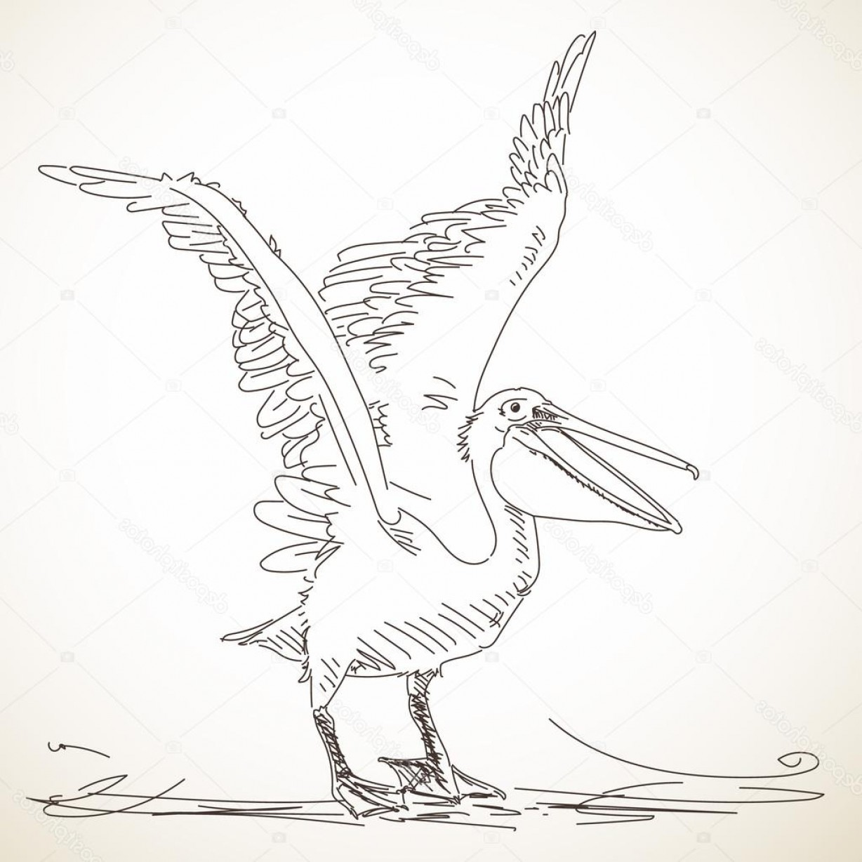 Pelican Vector Wings: Stock Illustration Pelican With Spread Wings