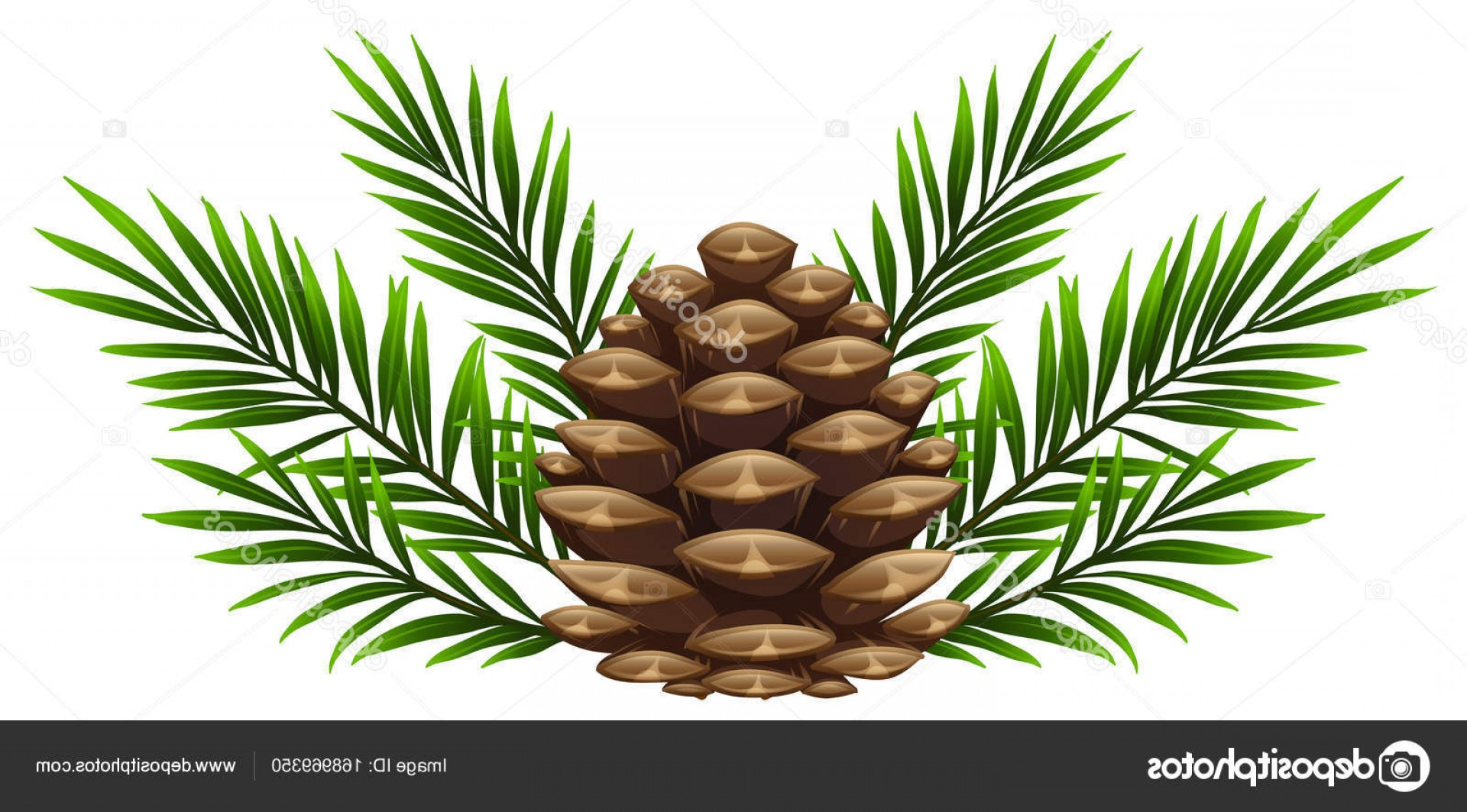 Pine Leaves Vector: Stock Illustration Pinecone With Pine Leaves On