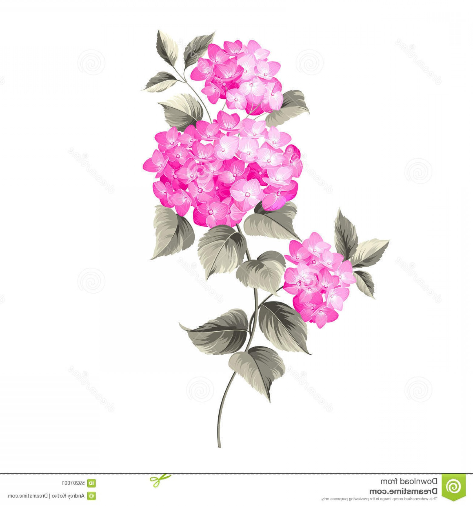 Vector Mop Flower: Stock Illustration Purple Flower Hydrangea White Background Mop Head Against White Vector Illustration Image