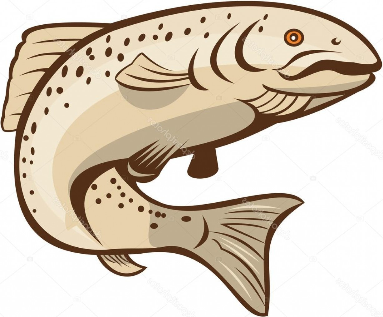 Speckled Trout Vector: Stock Illustration Rainbow Trout Jumping Cartoon