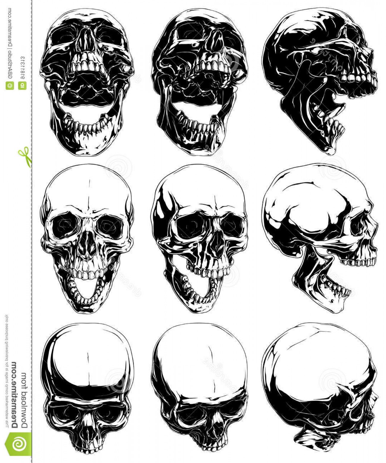 Cool Skull Vector: Stock Illustration Realistic Cool Detailed Graphic Skulls Vector Set Black White Human Different Projections Open Mouth Image
