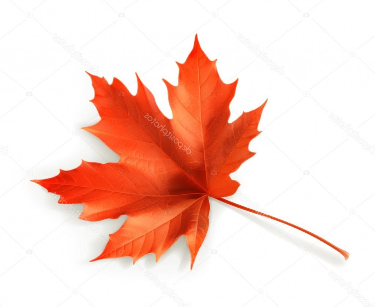 Red Maple Leaf Vector: Stock Illustration Red Maple Leaf Vector Object