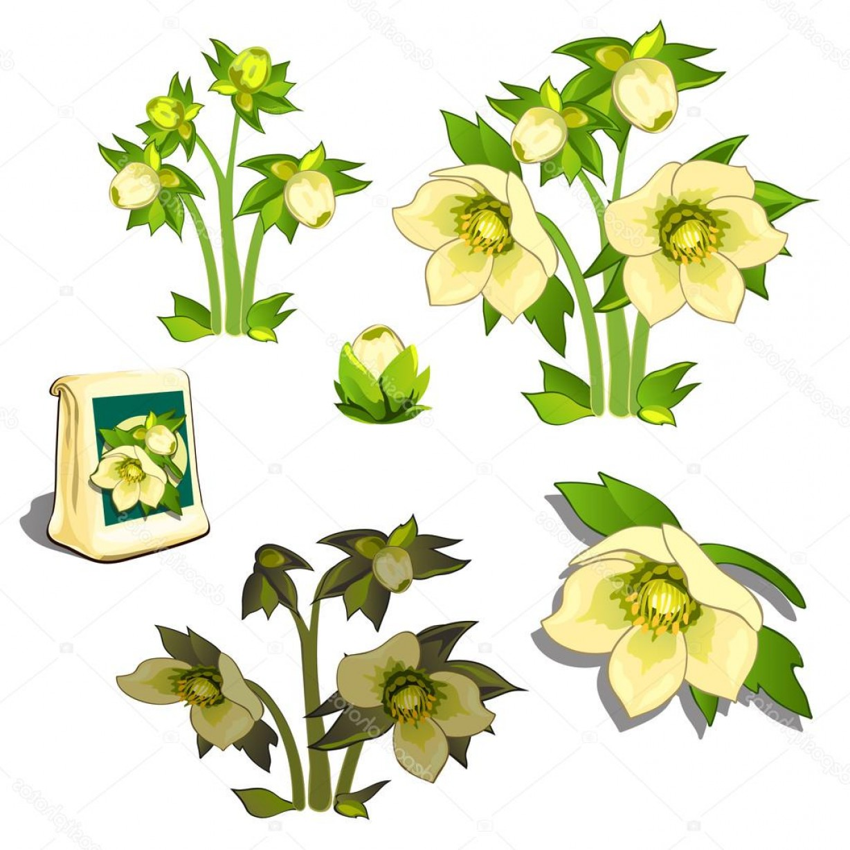 Seed Flower Vectors: Stock Illustration Seeds Stages Of Growth And