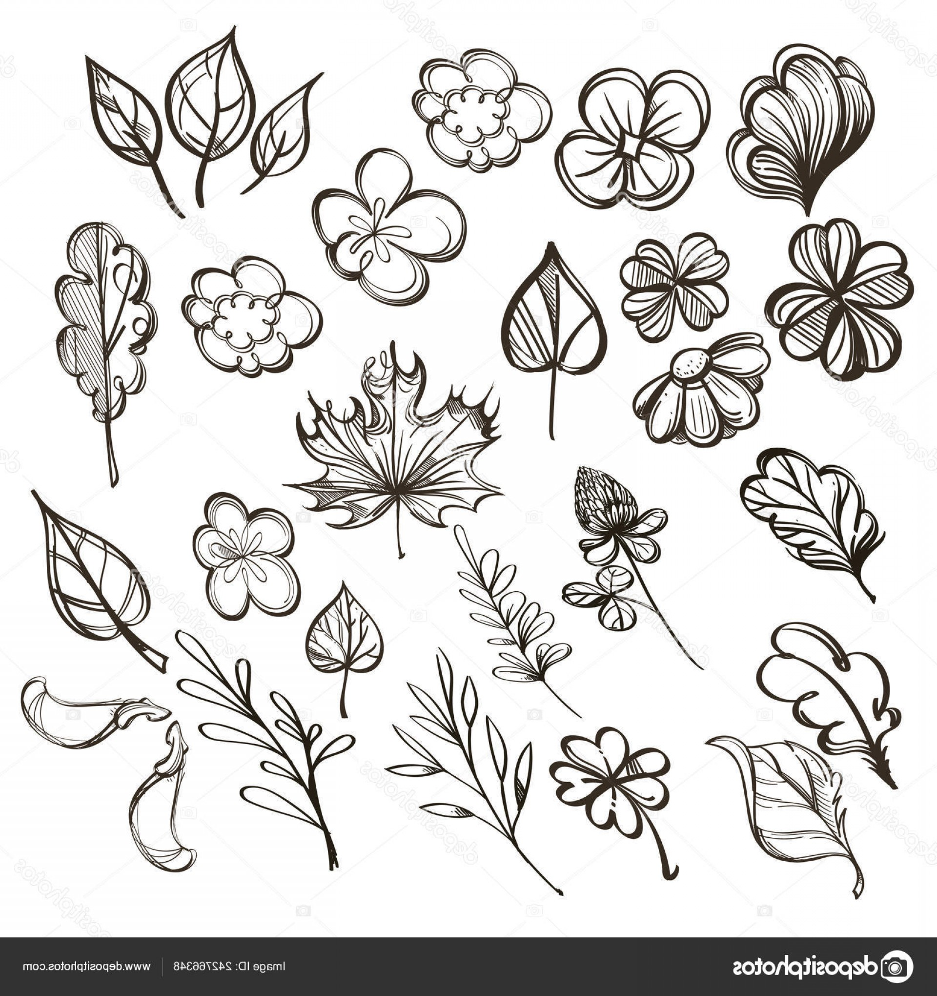 Wildflowers Outline Vector: Stock Illustration Set Botanical Graphics Wildflowers Herbs