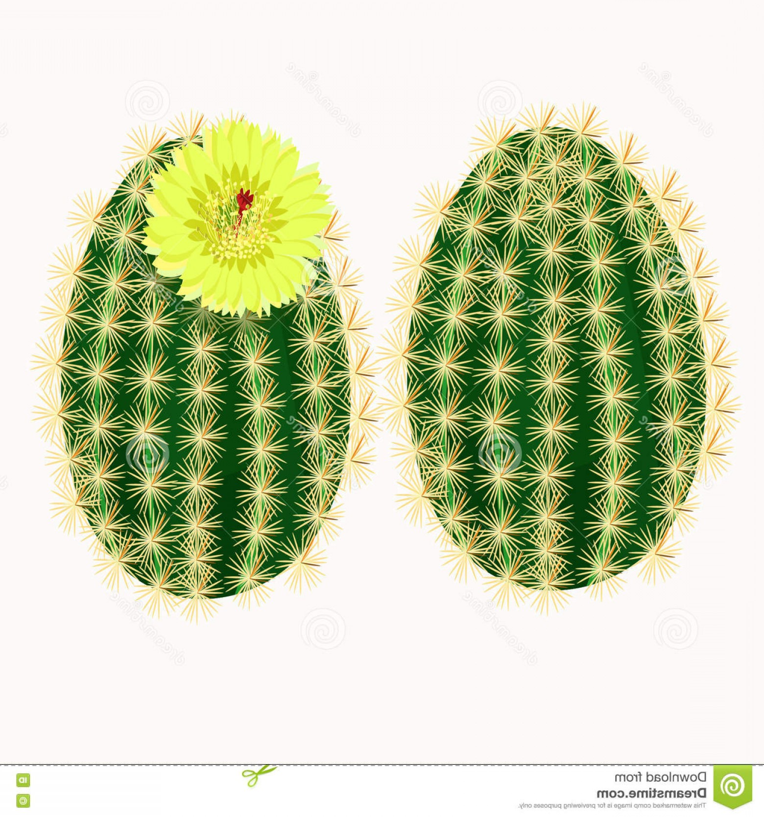Cactus And Flower Vector: Stock Illustration Set Flowering Cactus Flower Vector Illustration Image