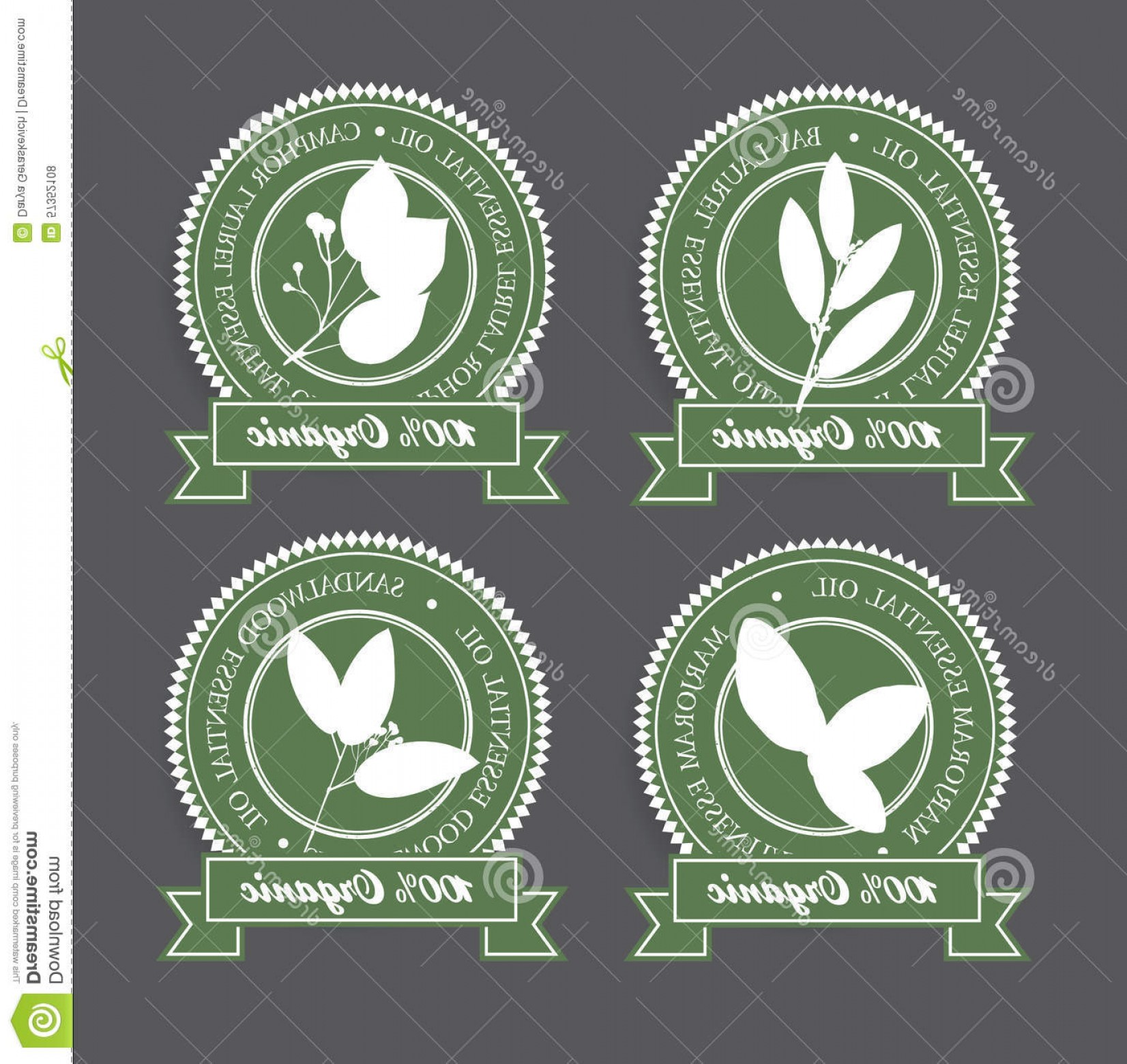 Green Bay Vector: Stock Illustration Set Green Essential Oil Labels Bay Laurel Camphor Laurel Marjoram Sandalwood Vector Illustration Image