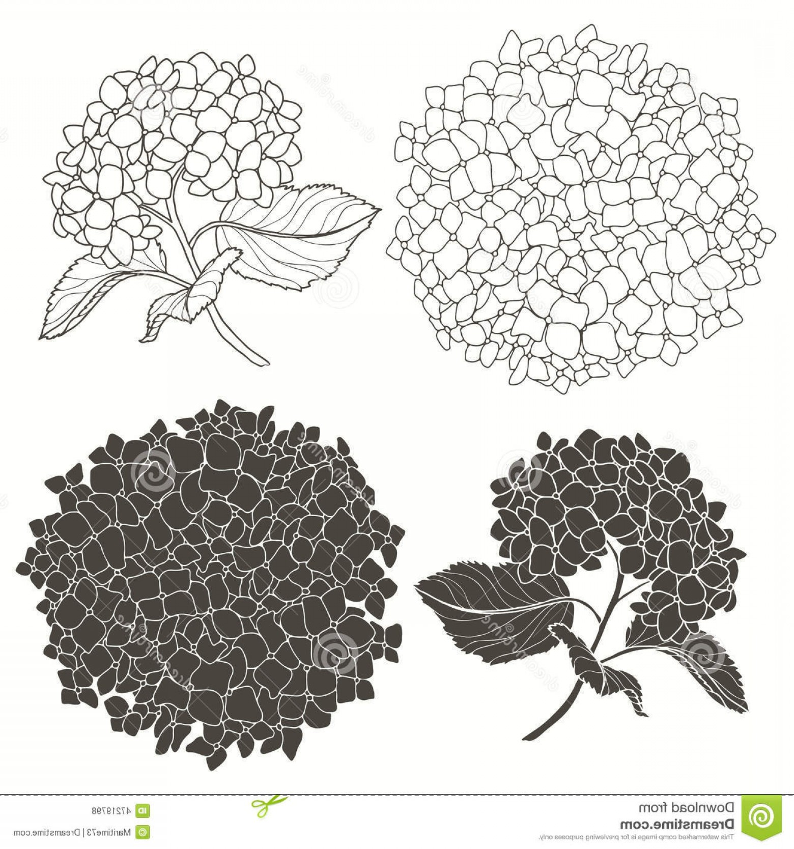 Hydrangea Vector Graphics: Stock Illustration Set Hydrangeas Isolated White Background Hand Drawn Vect Hydrangea Flower Vector Illustration Design Element Image