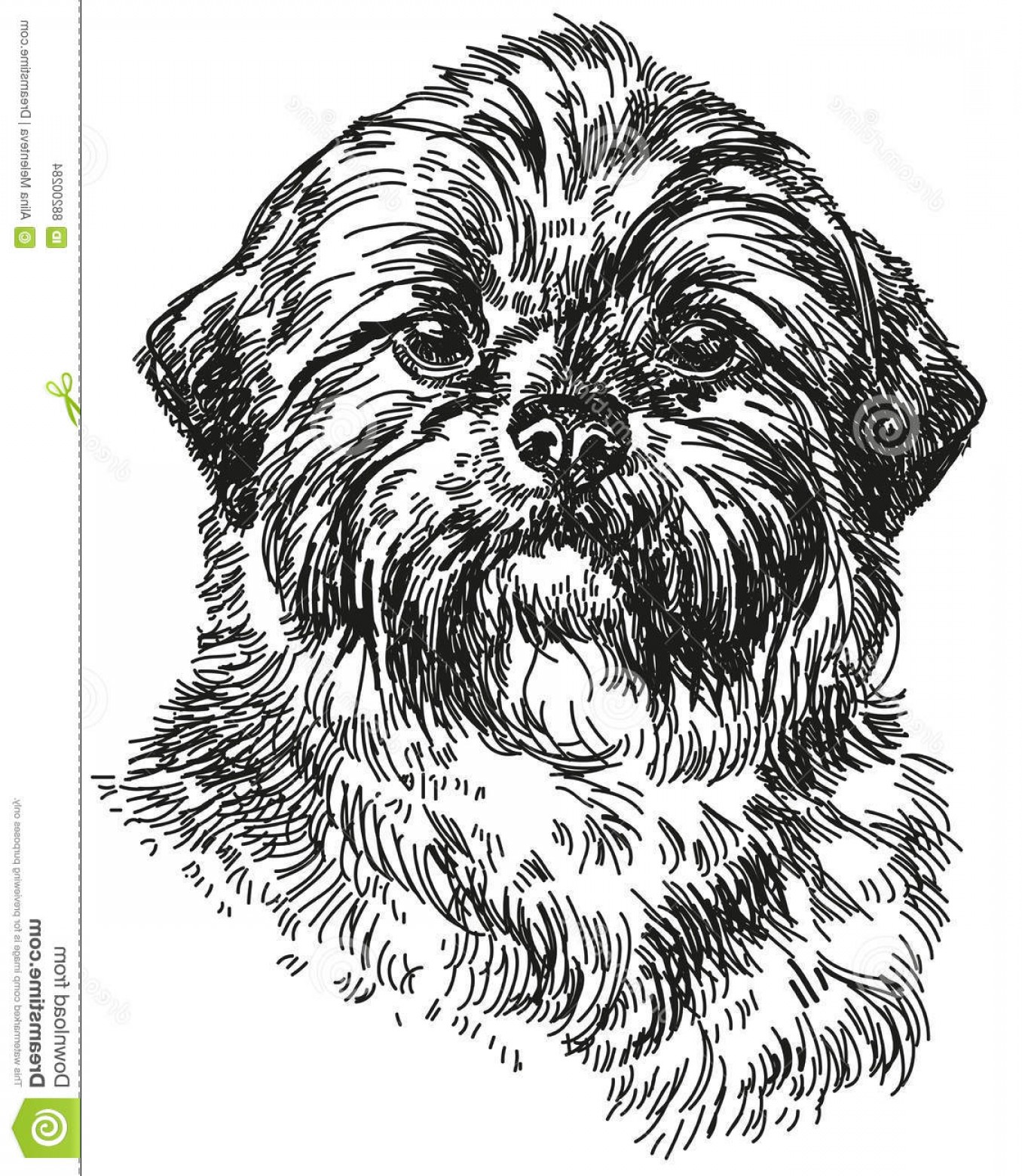 Shih Tzu Vector Siluete: Stock Illustration Shih Tzu Vector Hand Drawing Illustration Graphic Portrait Dog Isolated White Background Image