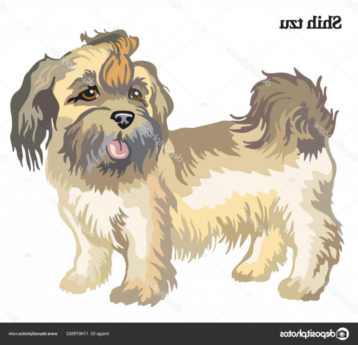 Shih Tzu Vector Siluete: Stock Illustration Shih Tzu Vector Illustration