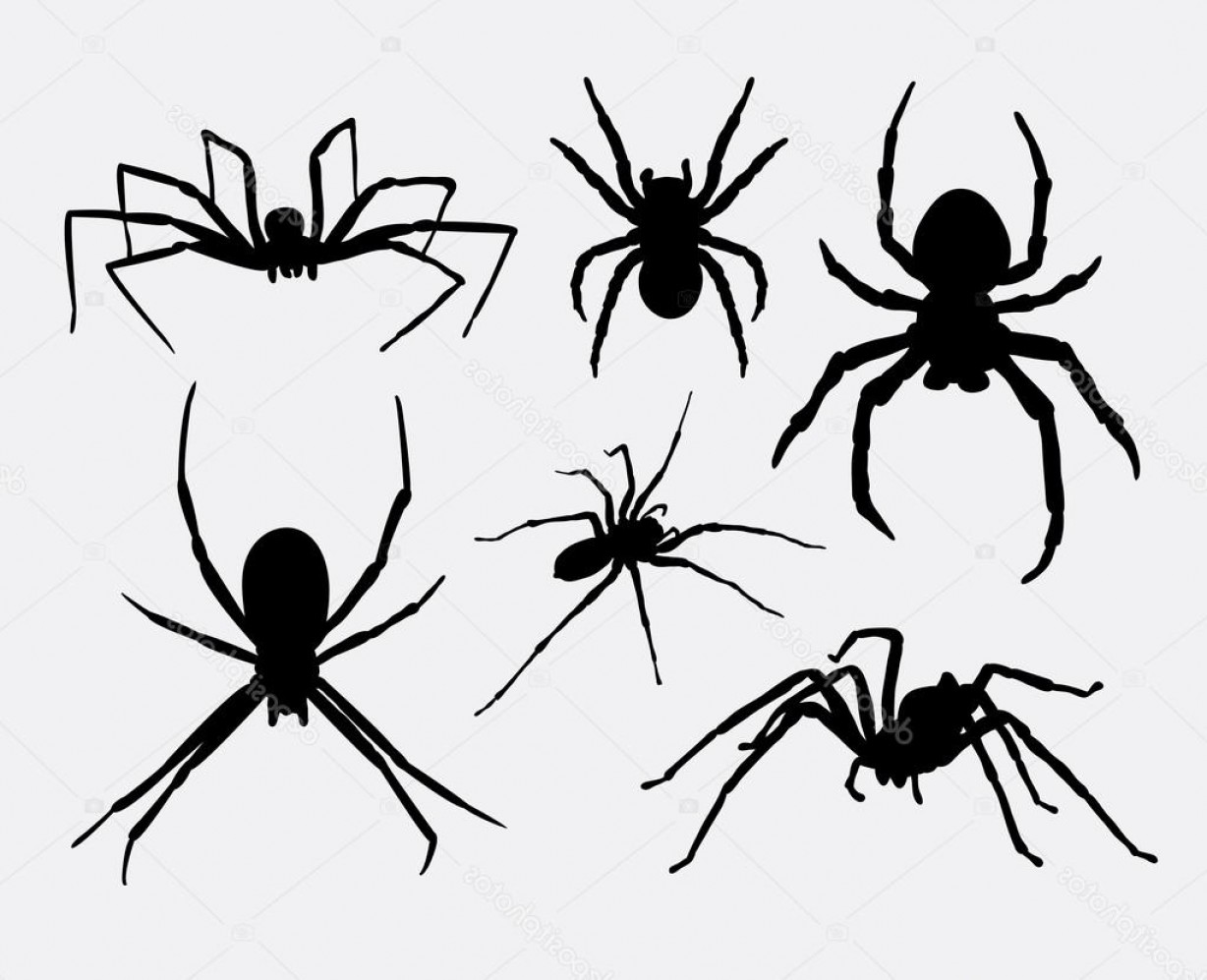 Easy Spider Vector Illustration: Stock Illustration Spider Insect Animal Silhouettes