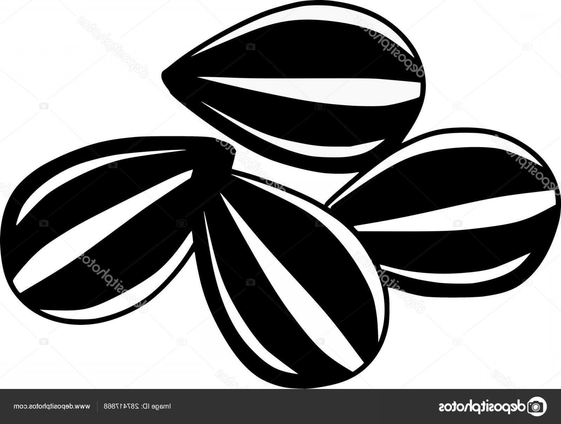 Vector Black And White Sunflower Seed: Stock Illustration Sunflower Seeds Vector Food Illustrations