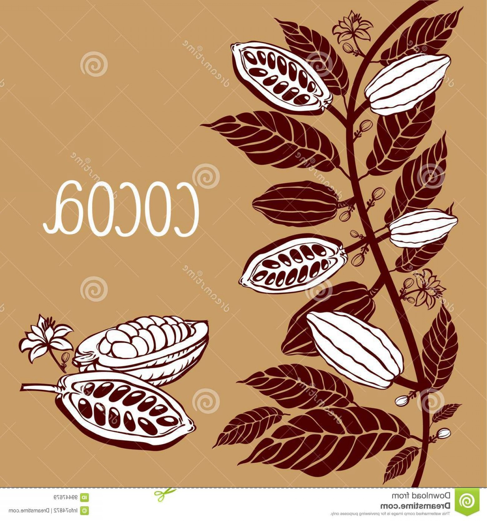 Chocolate Vector Plant: Stock Illustration Template Cacao Beans Leaves Cacao Beans Plant Vector Exotic Cacao Plants Image