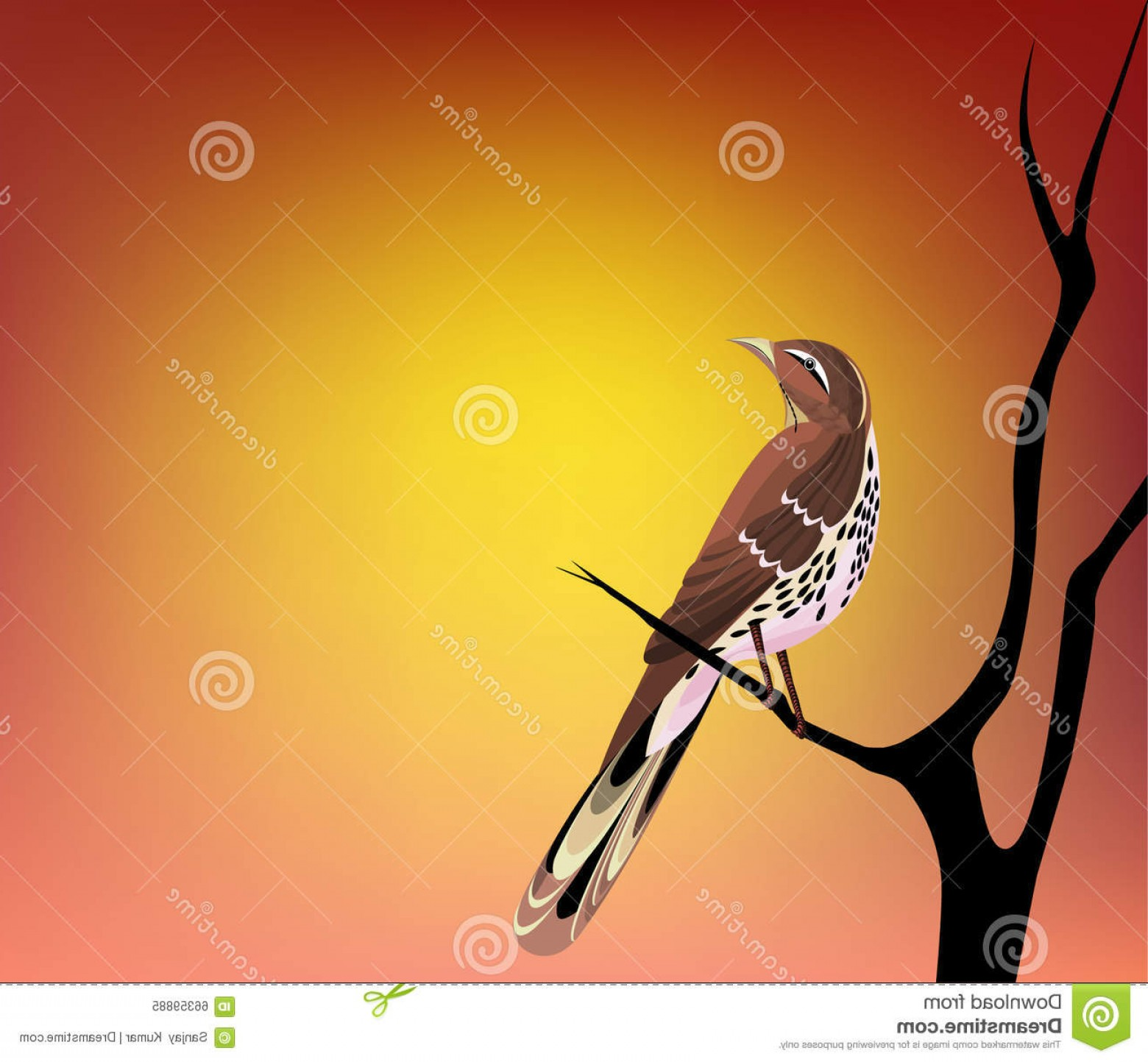 Thrasher Vector: Stock Illustration Thrasher Seeing Morning Sun All Elements Separate Layers Colour Can Be Changed Easily Image