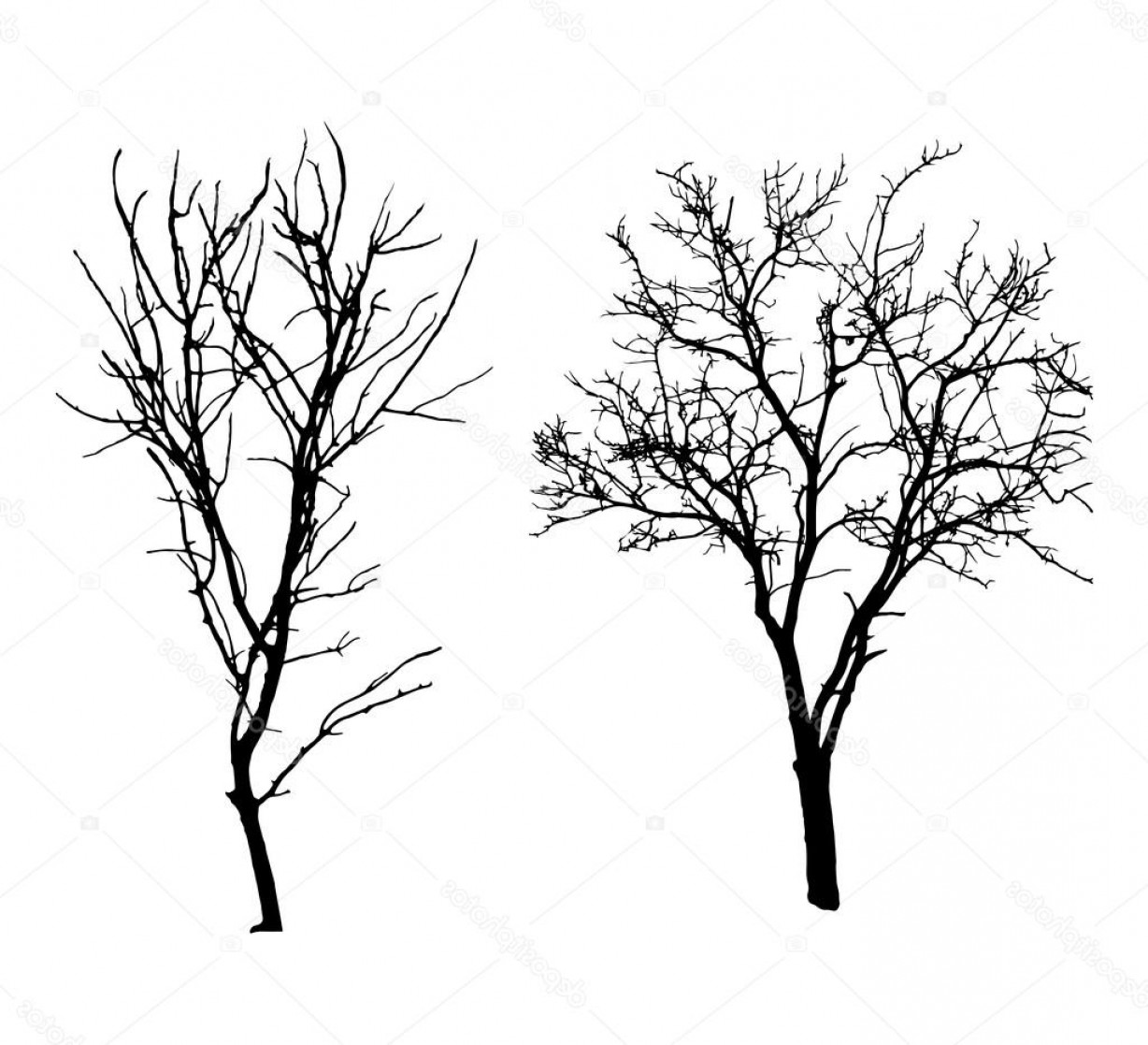 Winter Tree Silhouette Vector: Stock Illustration Two Winter Tree Black Silhouettes