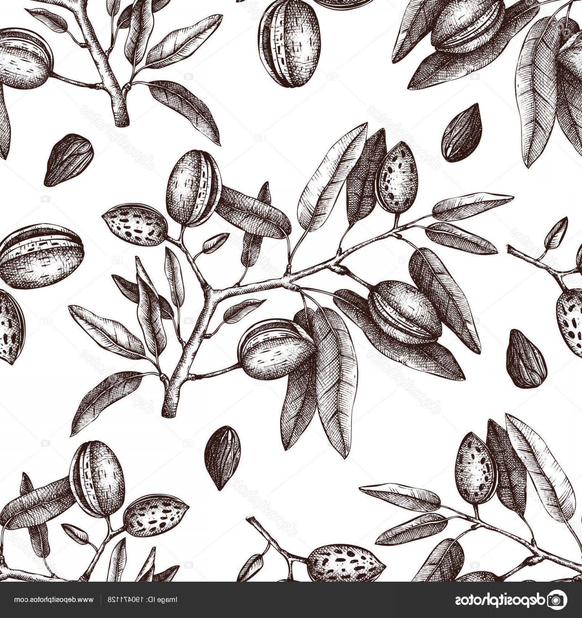Almond Tree Vector: Stock Illustration Vector Almond Background Hand Drawn