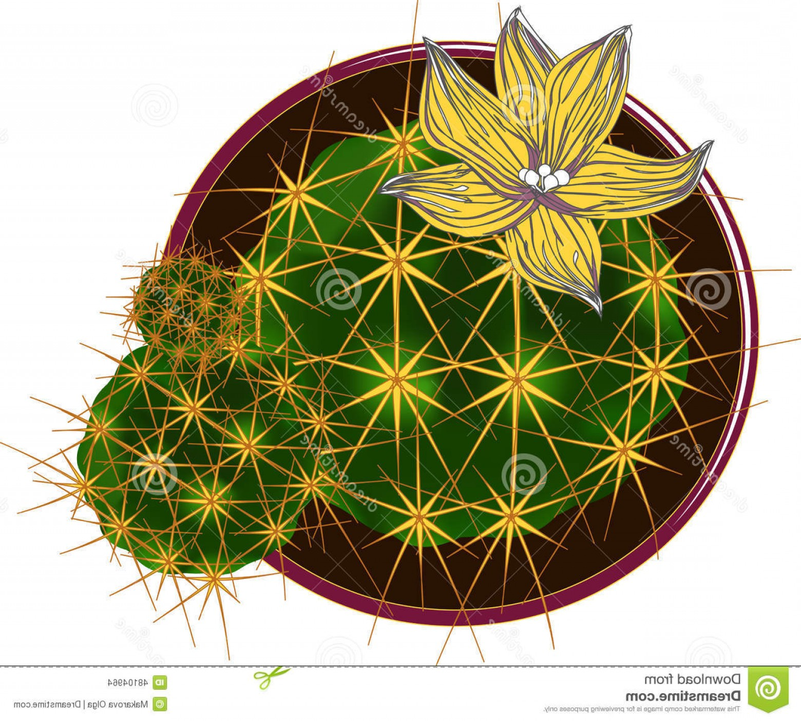 Cactus And Flower Vector: Stock Illustration Vector Cactus Flower Image Decorative Pot Viewed Top Has Two Little Cactuses Growing Image