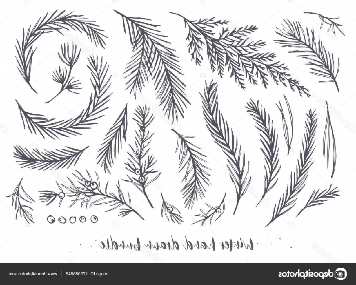 Pine Leaf Vector: Stock Illustration Vector Hand Drawn Elements Big