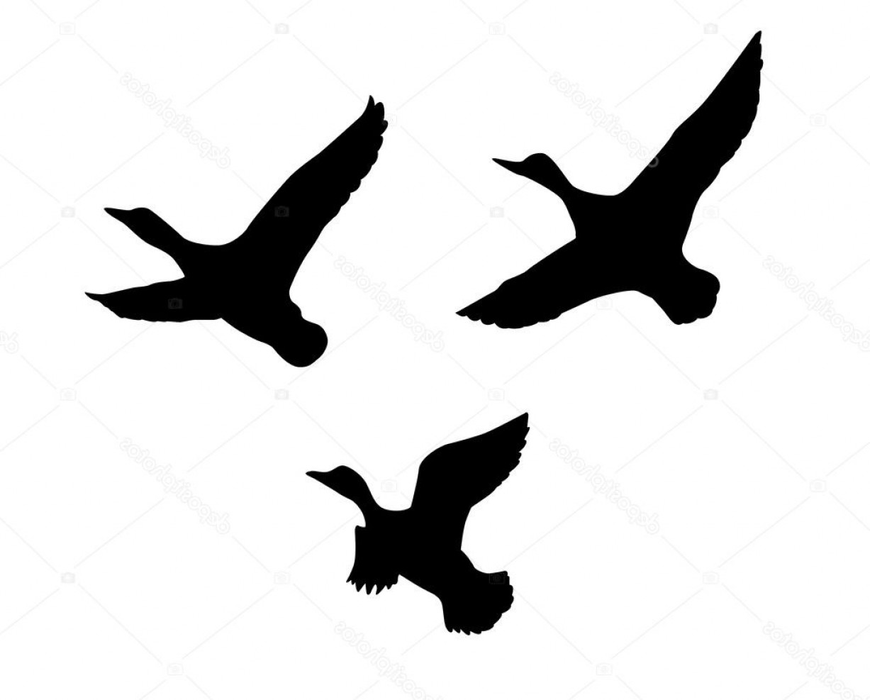 Flying Duck Outline Vector: Stock Illustration Vector Silhouette Flying Duck On