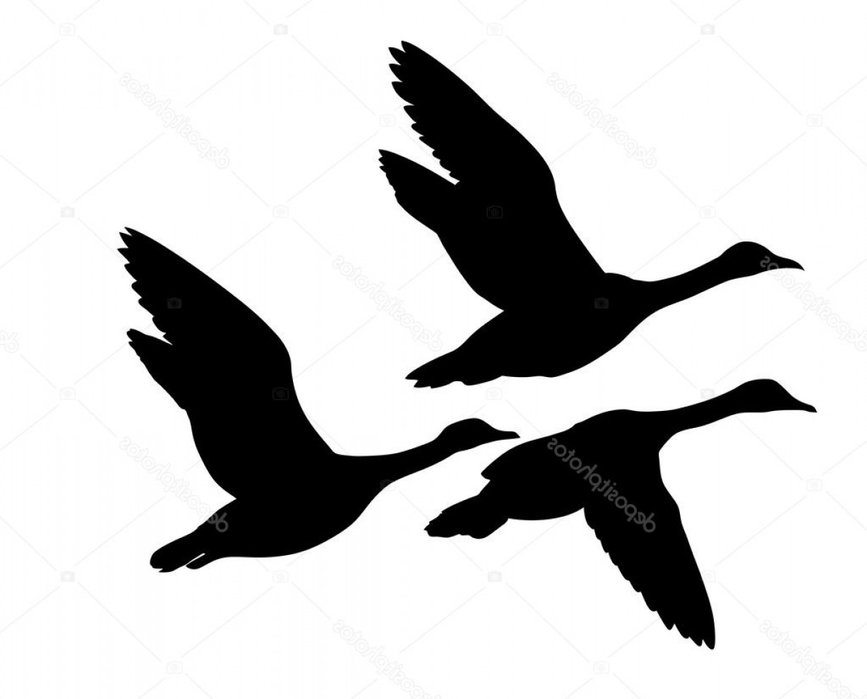 Flying Duck Outline Vector: Stock Illustration Vector Silhouette Flying Ducks On